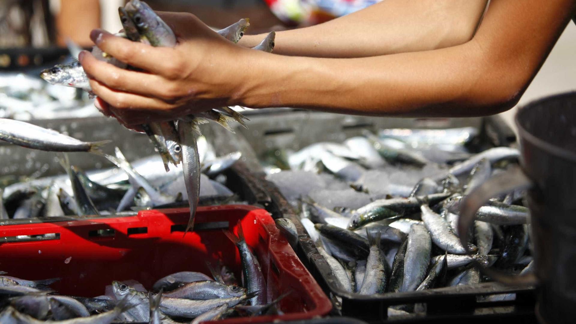 """Pesca da sardinha vai continuar com nível """"baixo e muito rigoroso"""""""