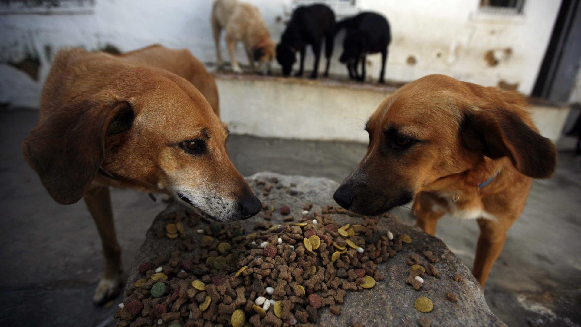 Recolhidos 50 cães de moradia em Câmara de Lobos. Vídeo gera polémica