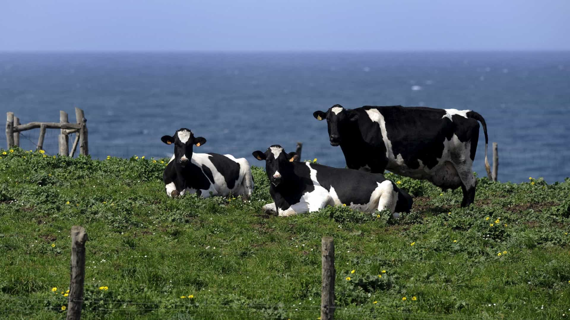 Produtores de leite vão poder receber quase quatro milhões em apoios