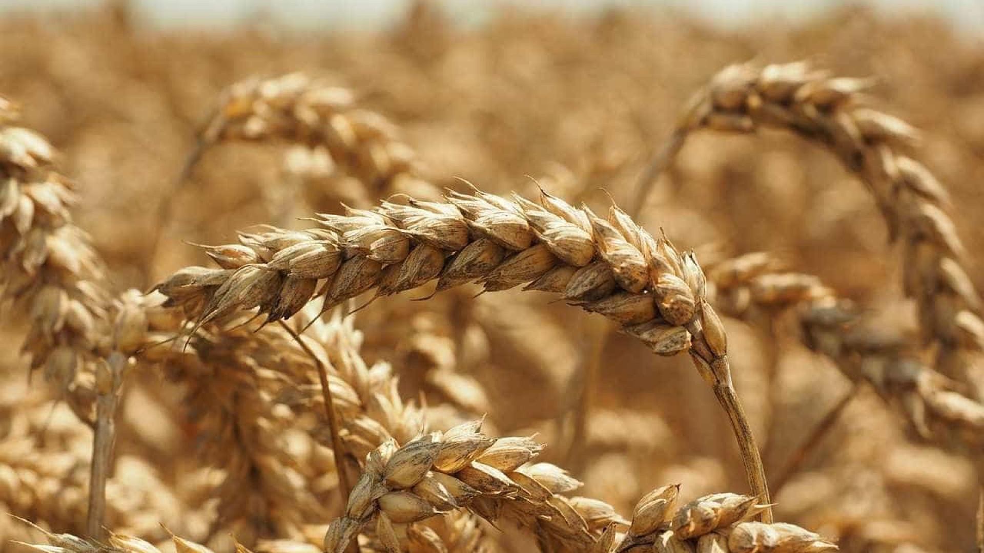 Governo moçambicano prevê produção de 3,3 milhões de toneladas de cereais