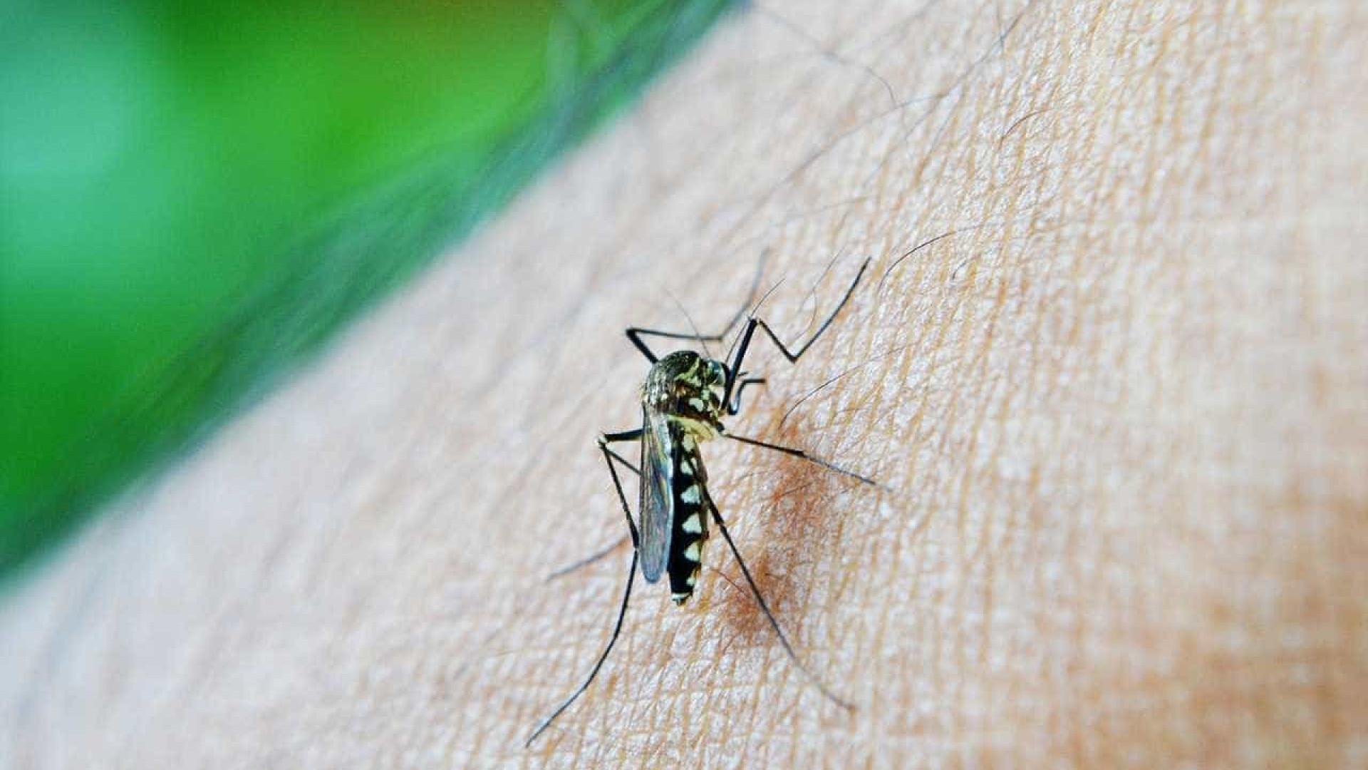 Google vai libertar 20 milhões de mosquitos cheios de bactérias nos EUA