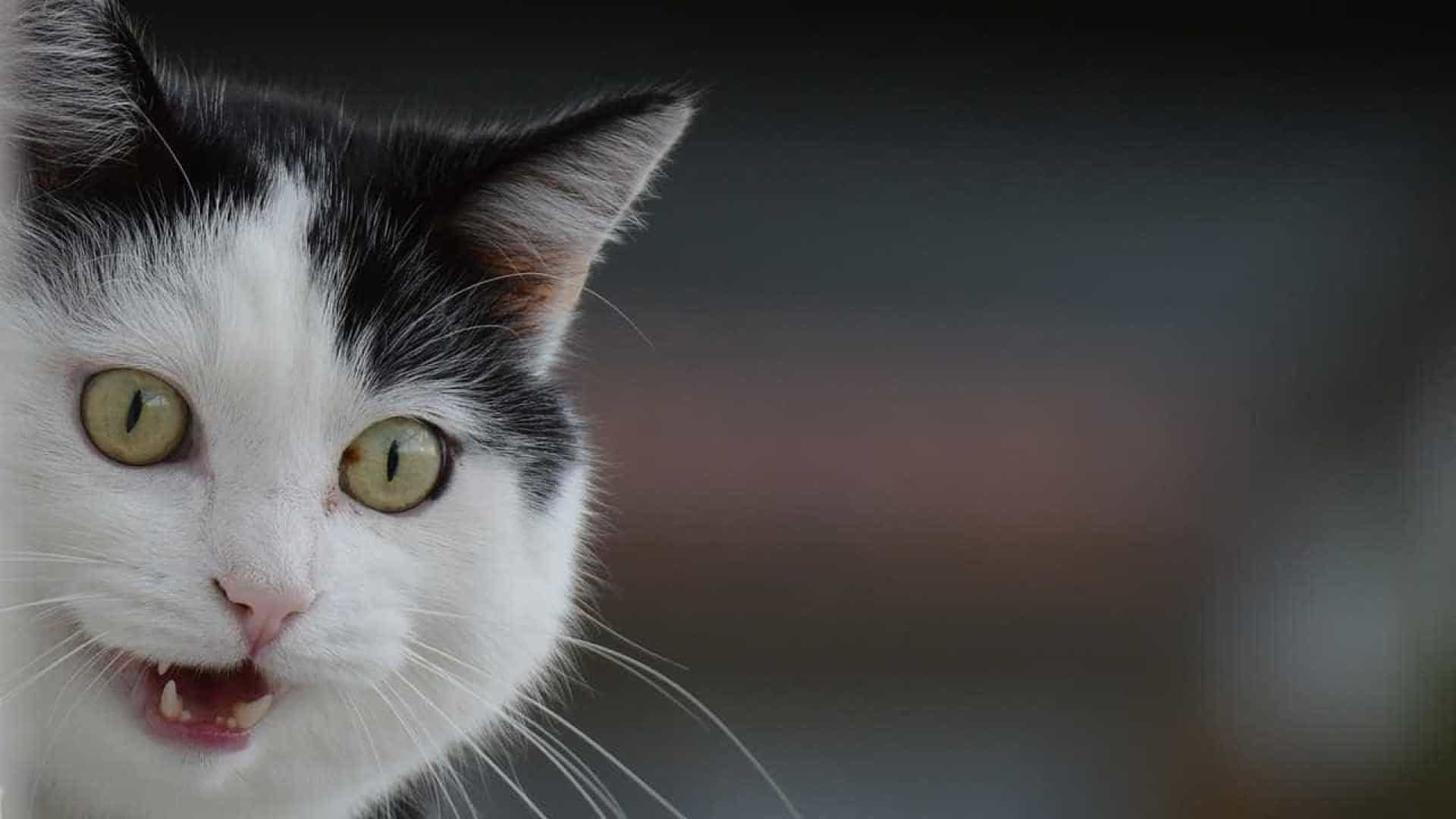 Inglaterra: Autoridades procuram um serial killer... de gatos