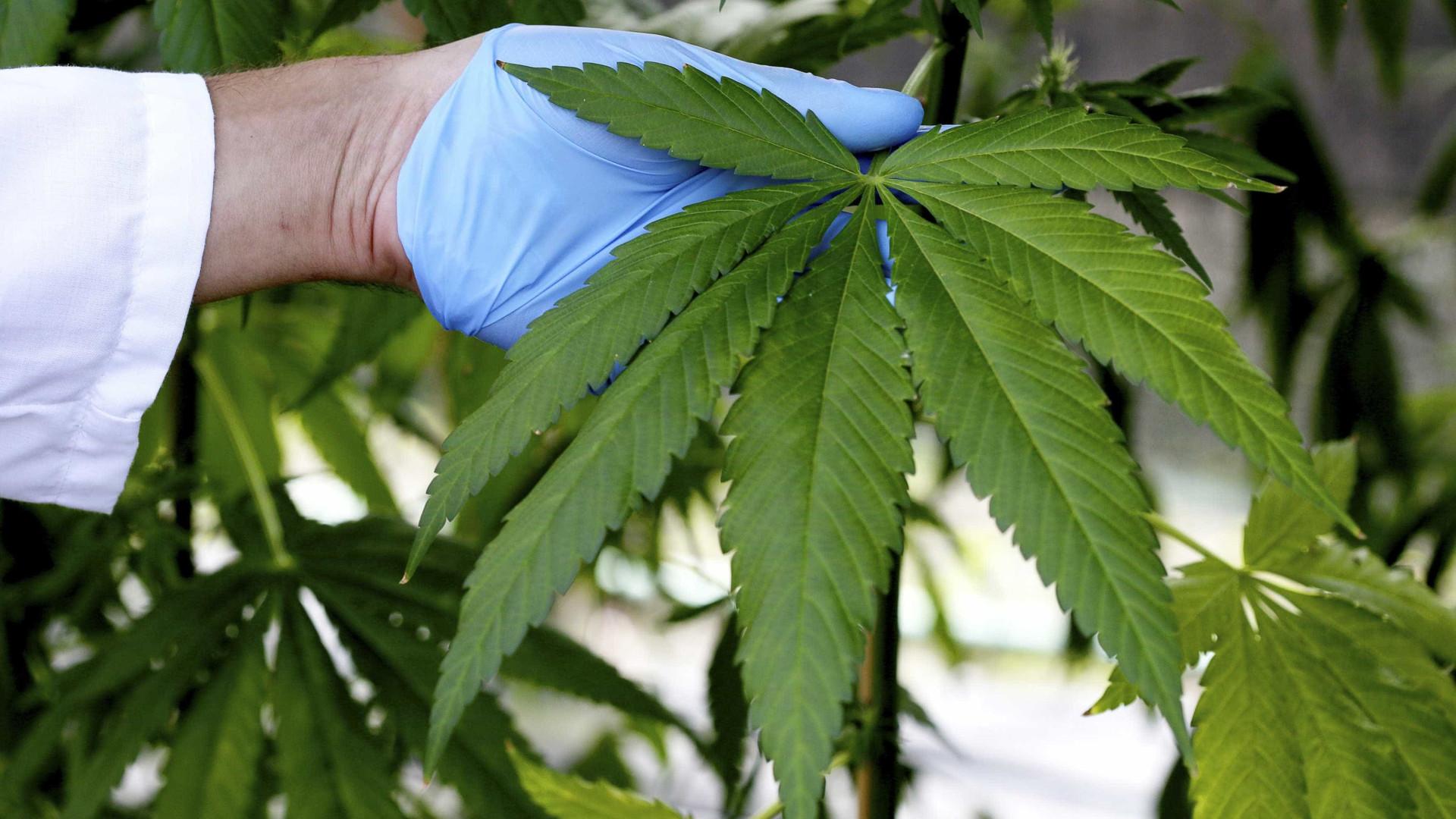México prepara legalização de 'cannabis' para fins recreativos