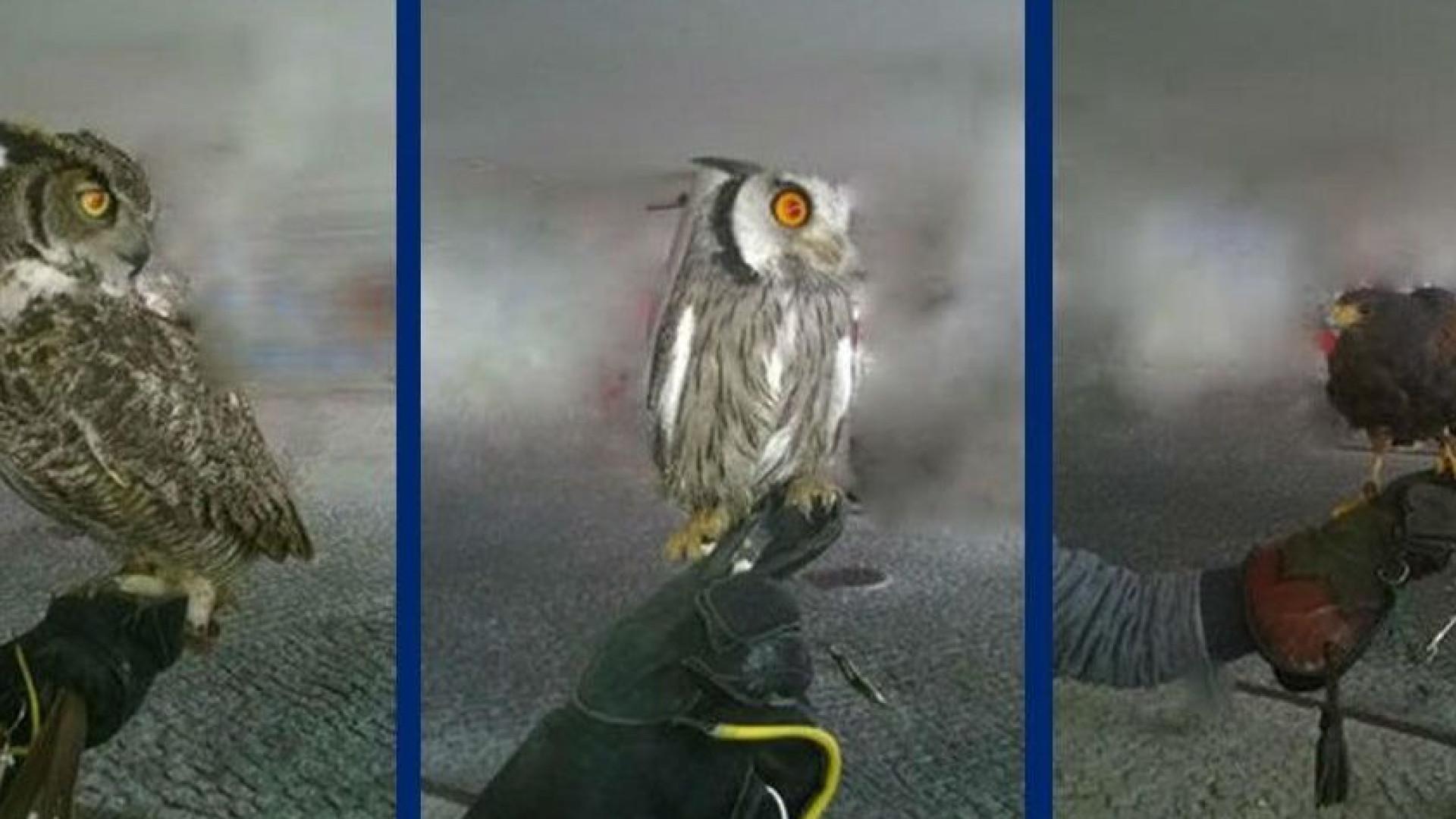 Aves de espécie protegida apreendidas em feira medieval