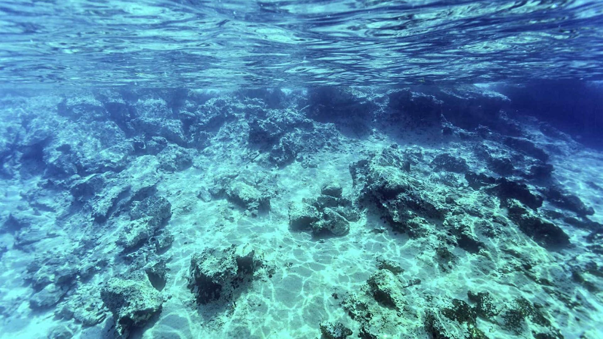 Solução para fim do plástico no mar pode estar num fungo que vive no mar
