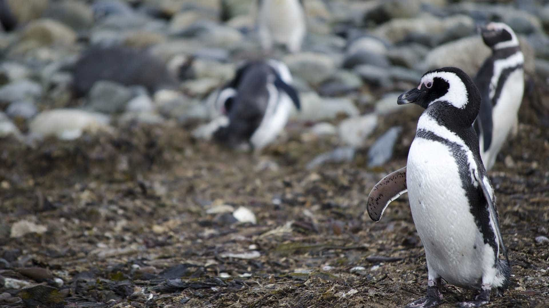 Zoo vê morrer todos os seus pinguins devido a malária