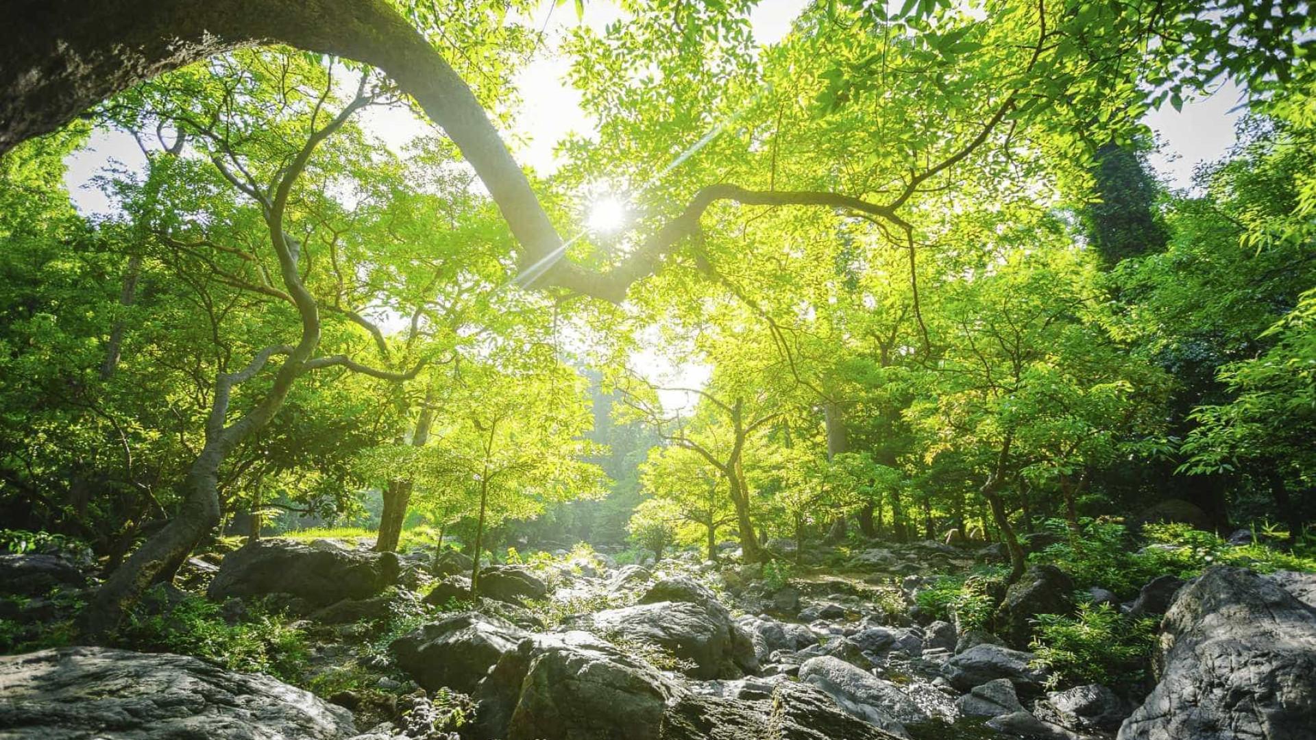"""Cuidar da floresta está na ordem do dia mas """"sem ovos não há omeletes"""""""