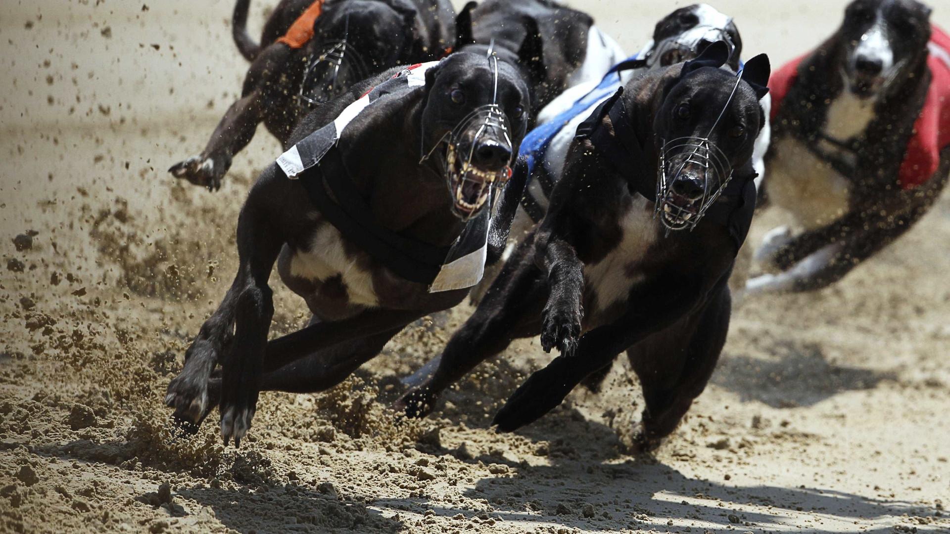 PAN denúncia maus tratos a animais em corridas de galgos
