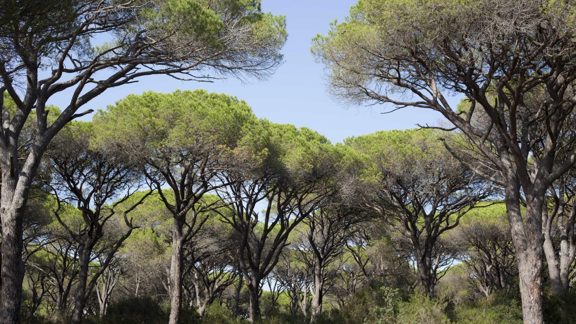 Federação de Motociclismo oferece árvores a concelhos afetados