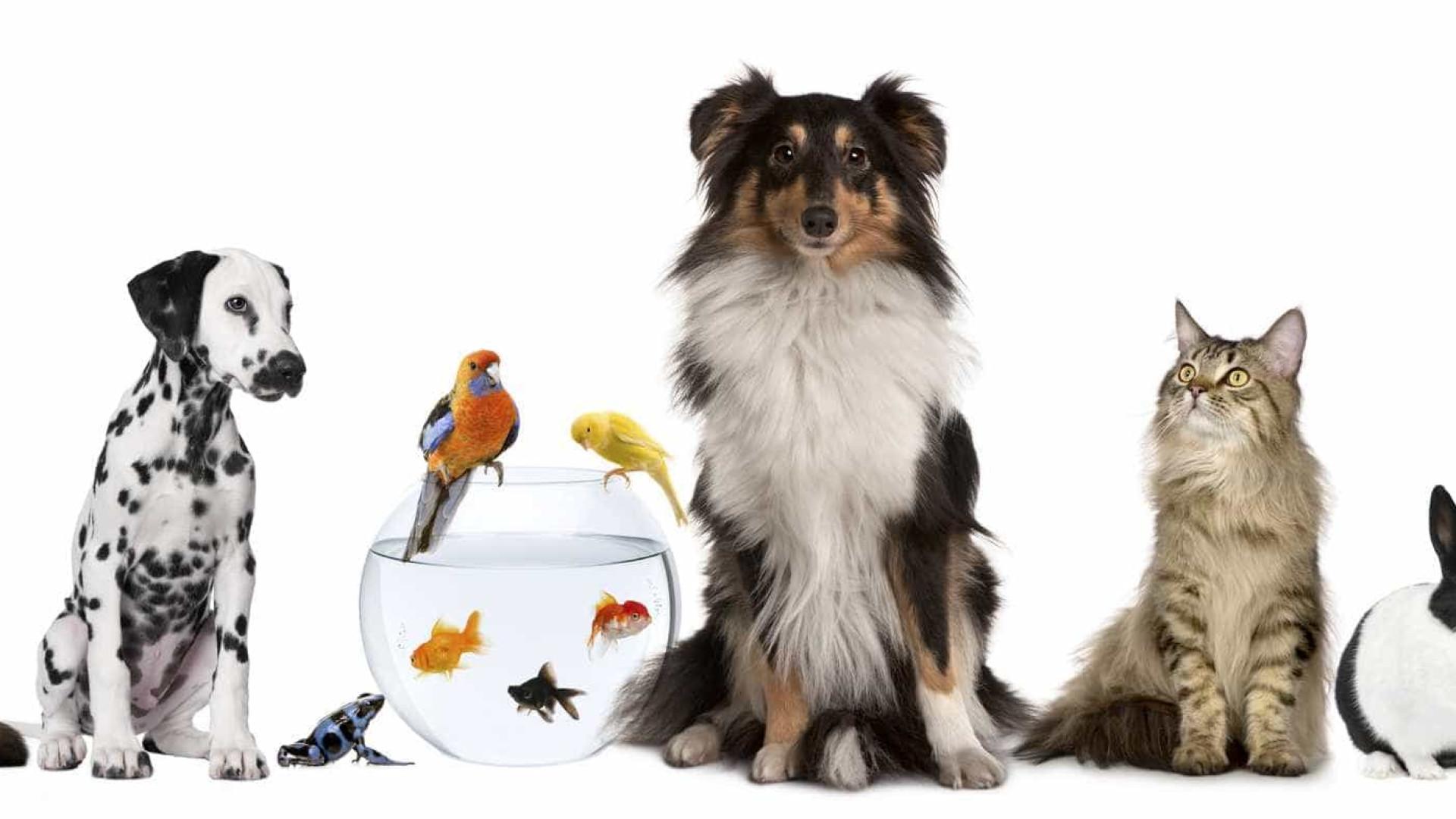 Cão, gato, peixe ou pássaro. Qual o 'rei de estimação' de cada nação?