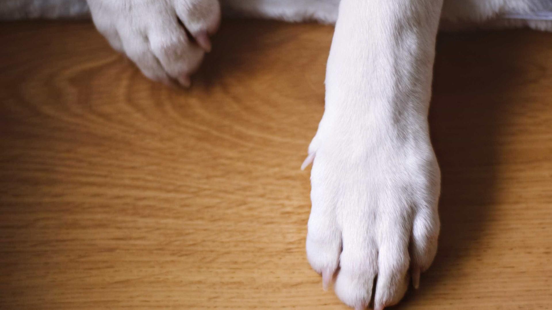 """Câmara justifica abate de cadela. Foi encontrada """"em profundo sofrimento"""""""