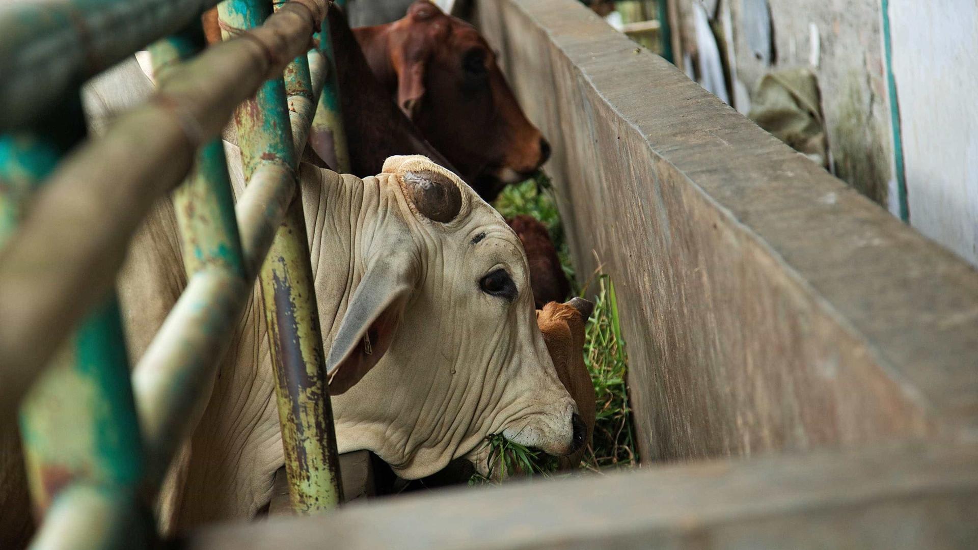 Carne doente: PAN volta a propor câmaras de vigilância em matadouros