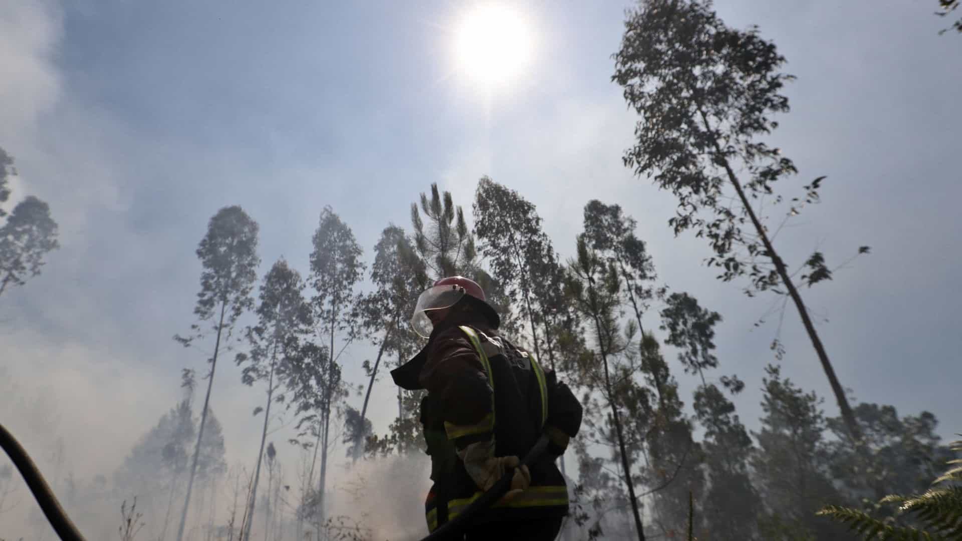 """Proteção Civil: Fogo na Tabua """"confinado às zonas de difícil acesso"""""""