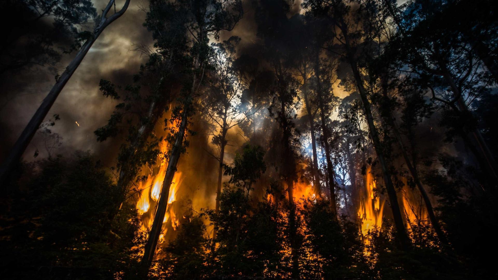 Incêndio em Abrantes é o mais preocupante. Já há um bombeiro ferido