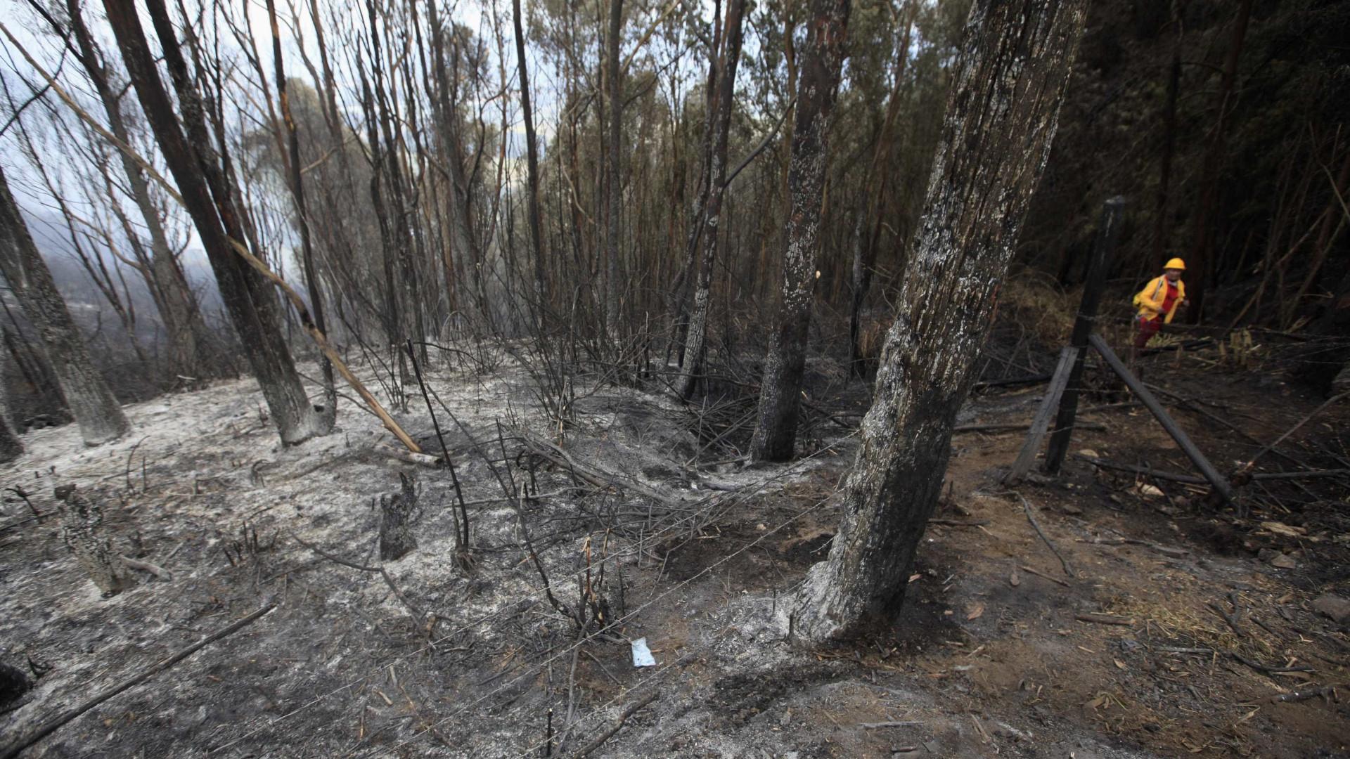Quercus: Viveiros nacionais produzem eucaliptos para plantações ilegais