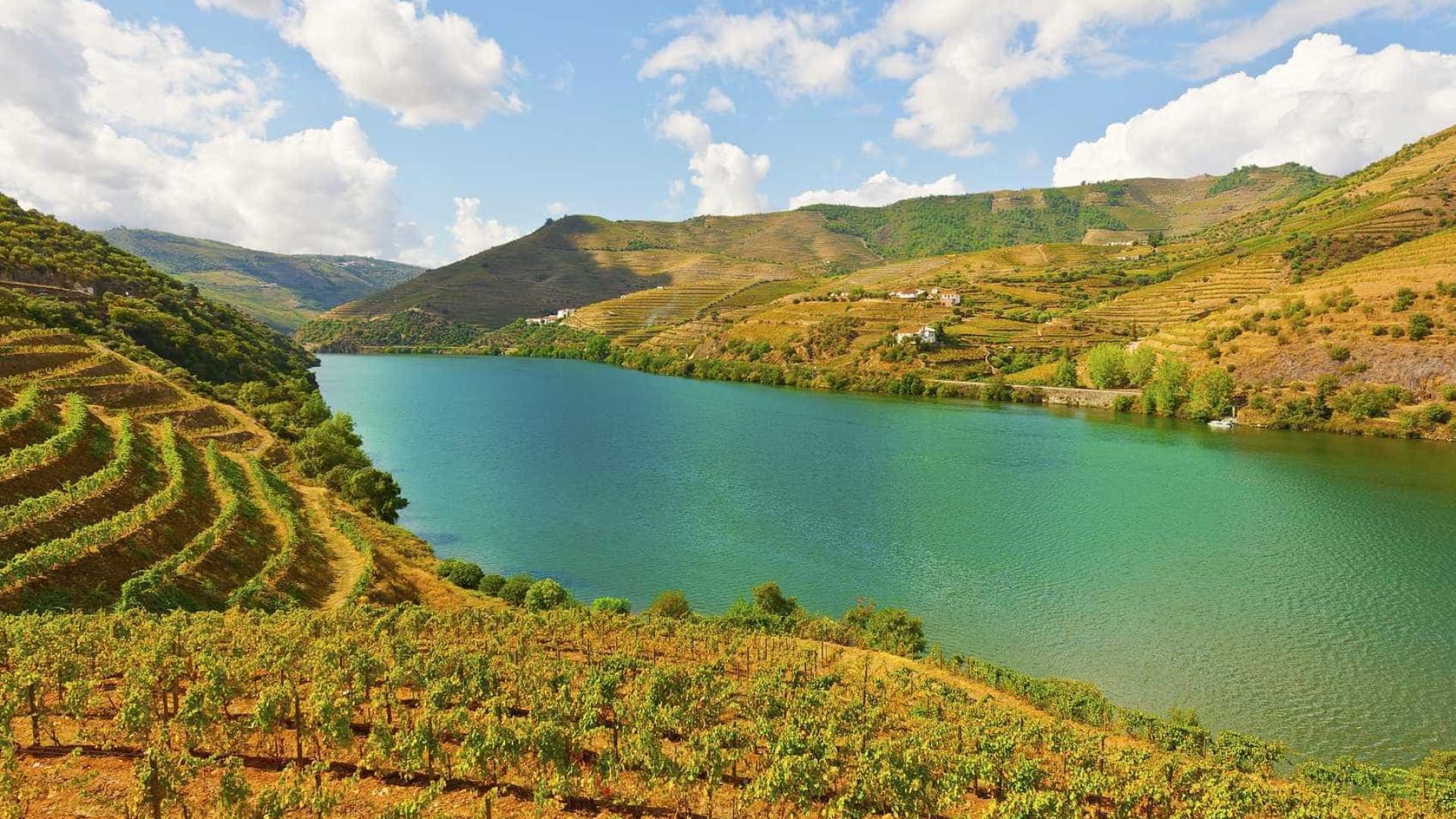 Está a ser um ano complicado de levar a uva ao lagar no Douro