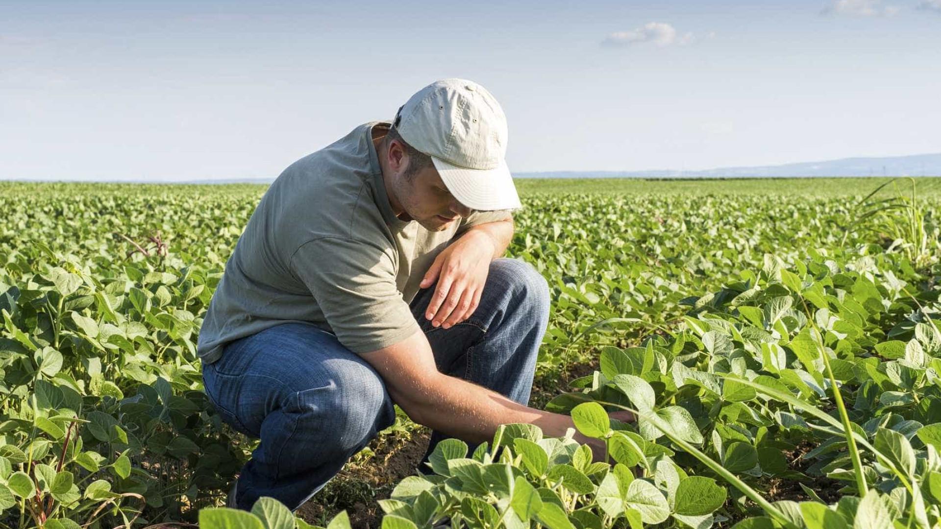 Todos os agricultores que se candidatem terão direito a apoio