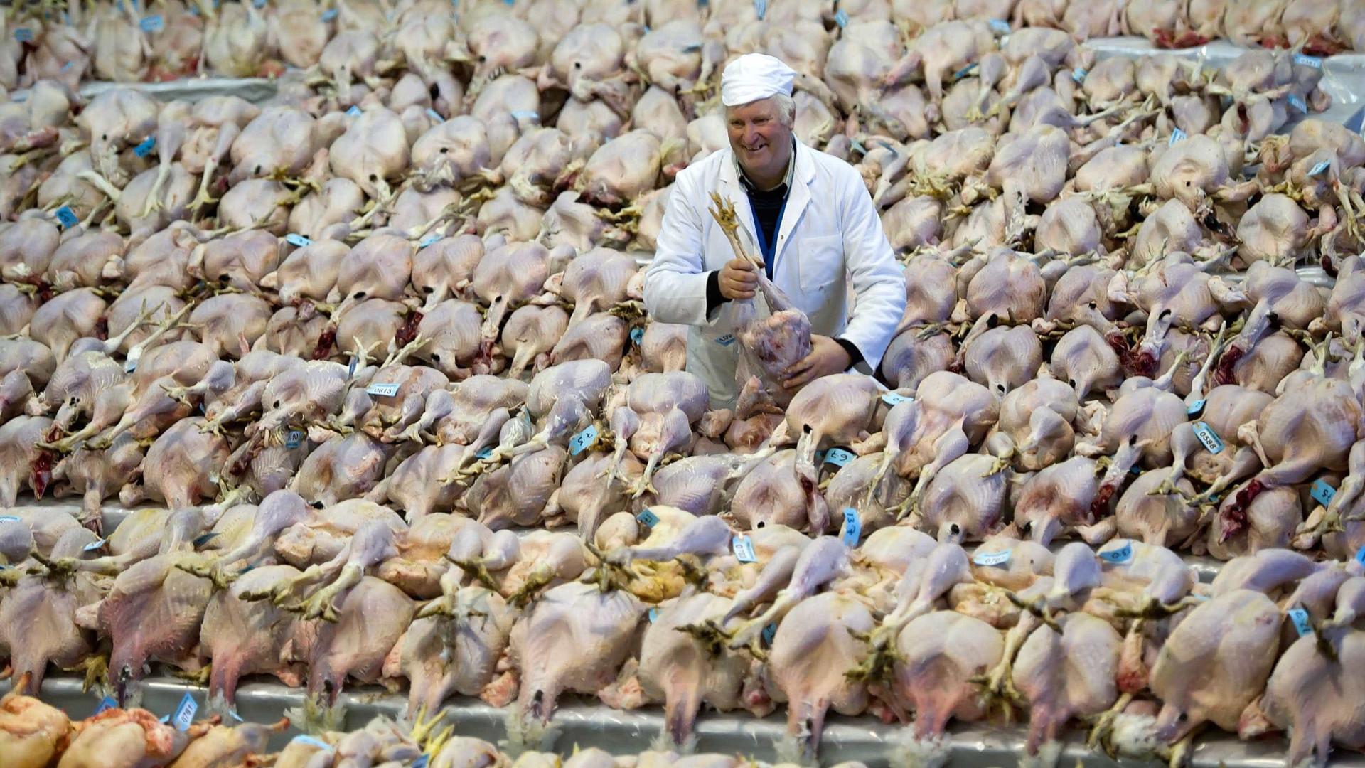 Japão abate 320 mil animais por causa da gripe das aves