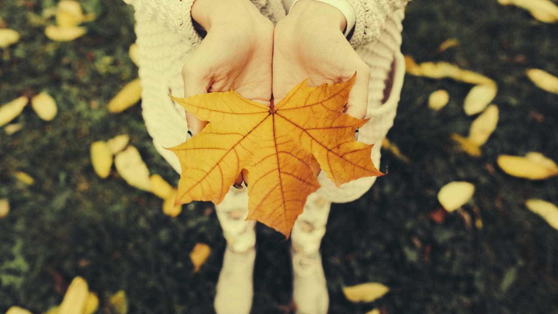 Também adora o outono? A ciência explica porquê