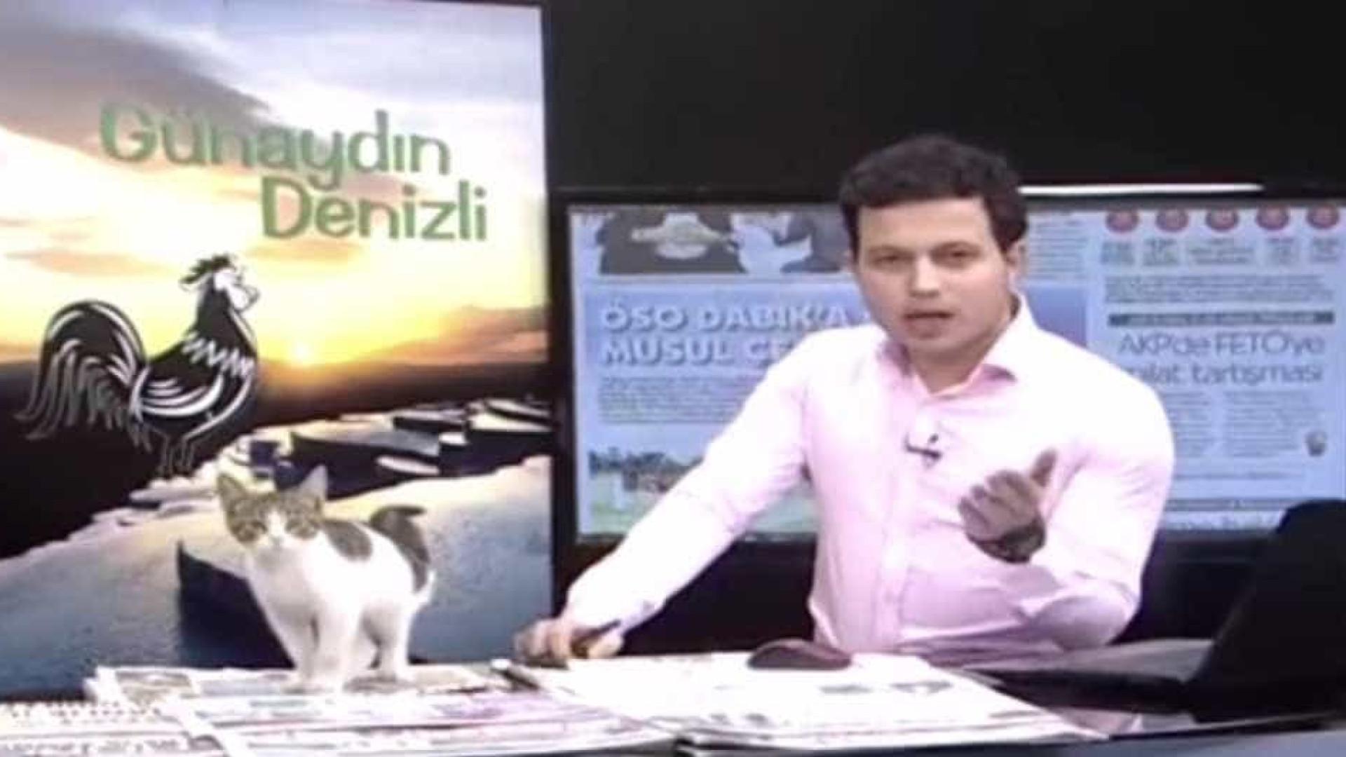 Gato vadio invade emissão da TV turca