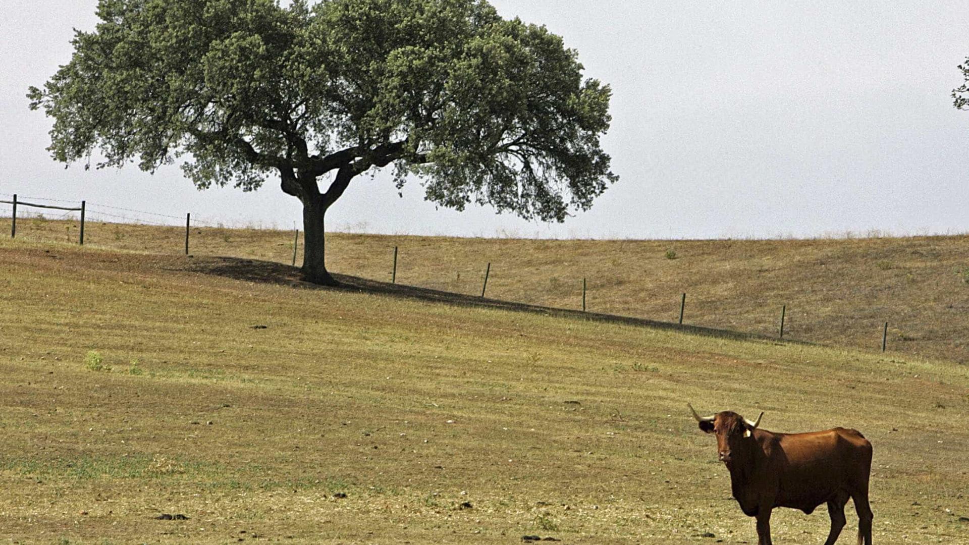 Câmara de Monchique estima que milhares de sobreiros tenham morrido