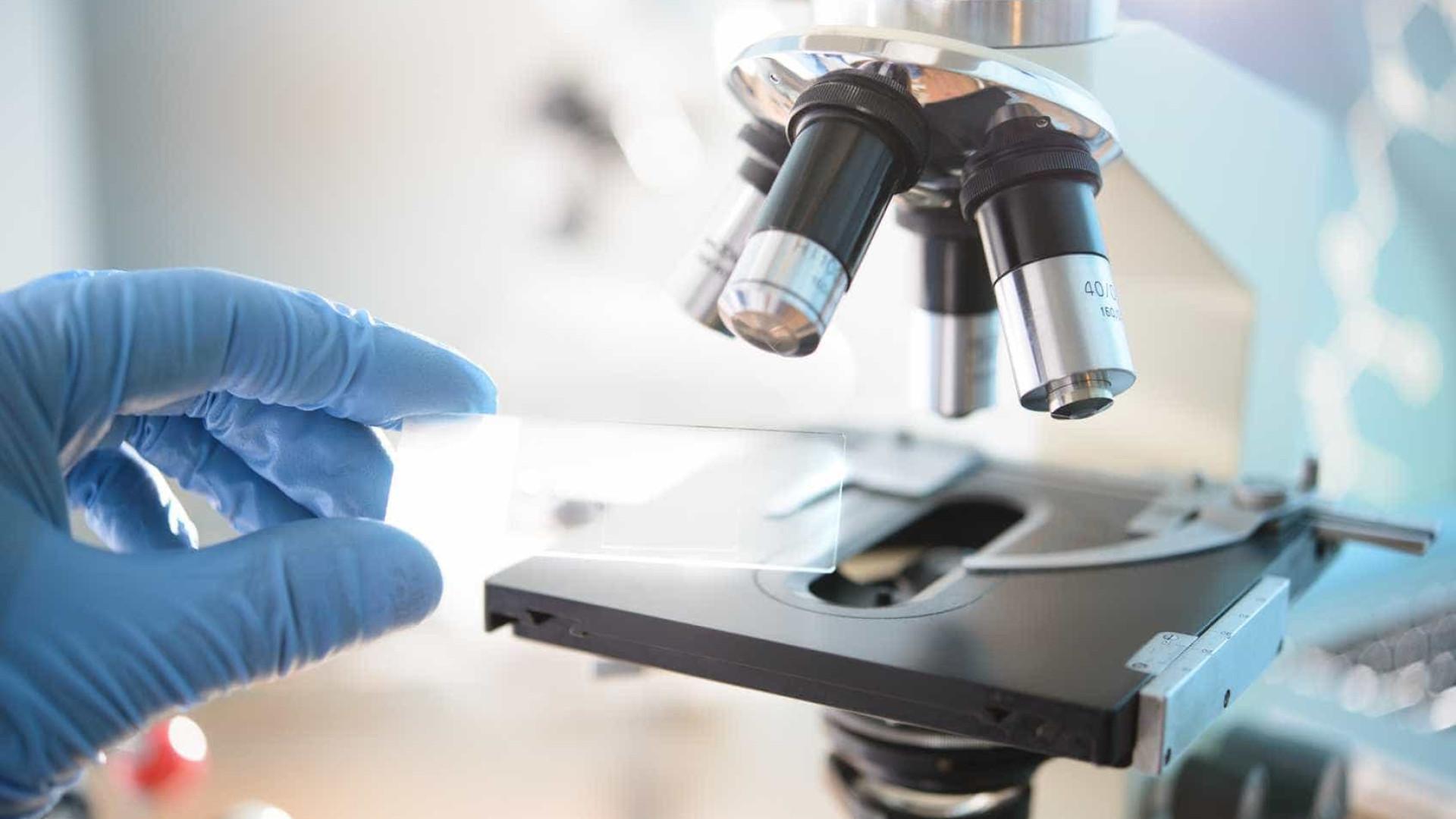 Presença de proteína na salmonela torna bactéria virulenta