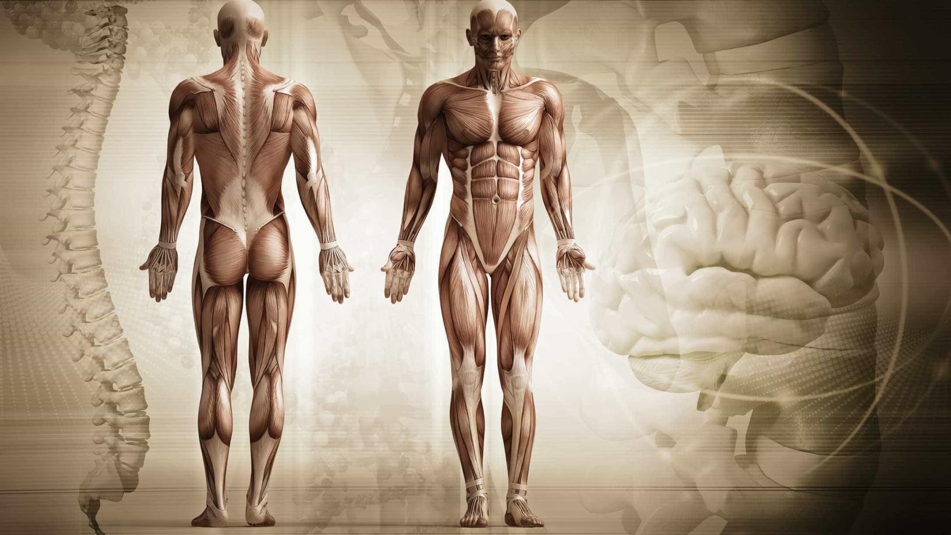 Músculos feitos de nylon? A invenção é do MIT