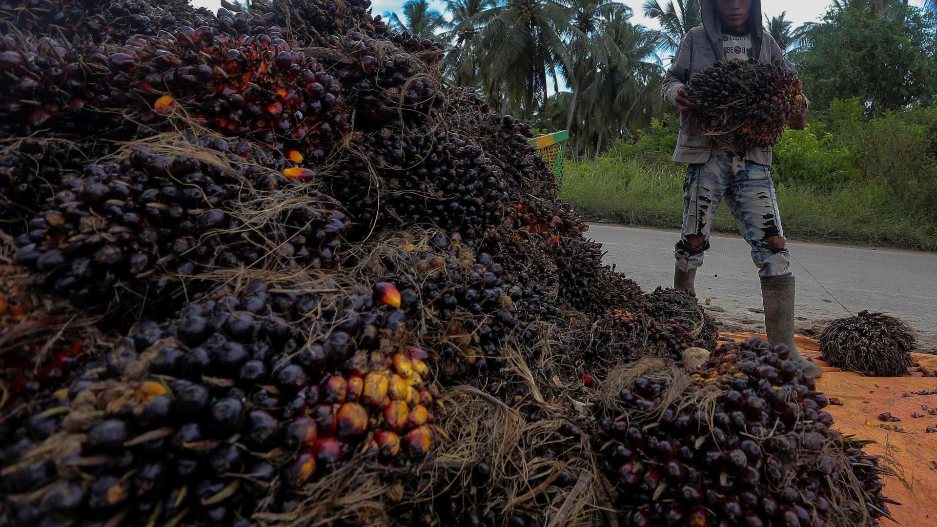 Multinacionais acusadas de ignorar excessos na produção de óleo de palma