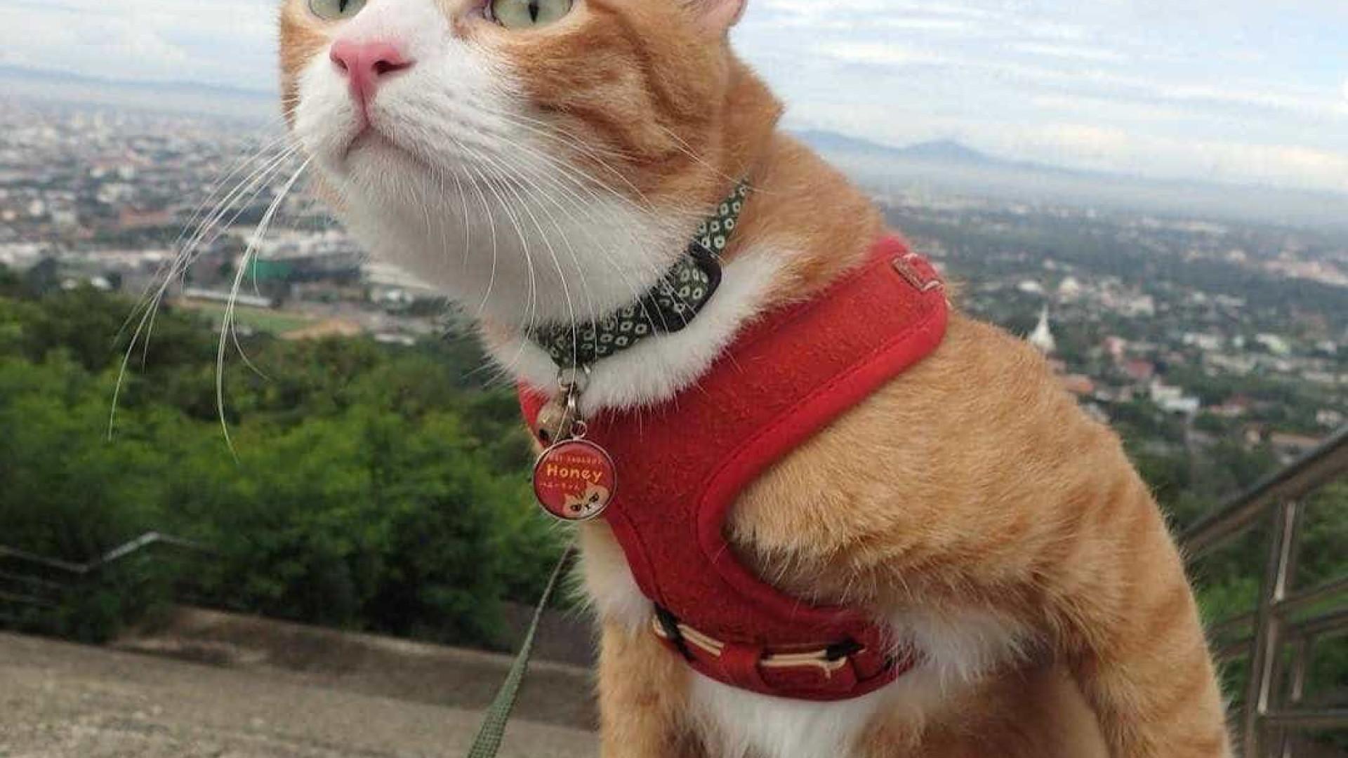 Este gato é uma celebridade na Tailândia