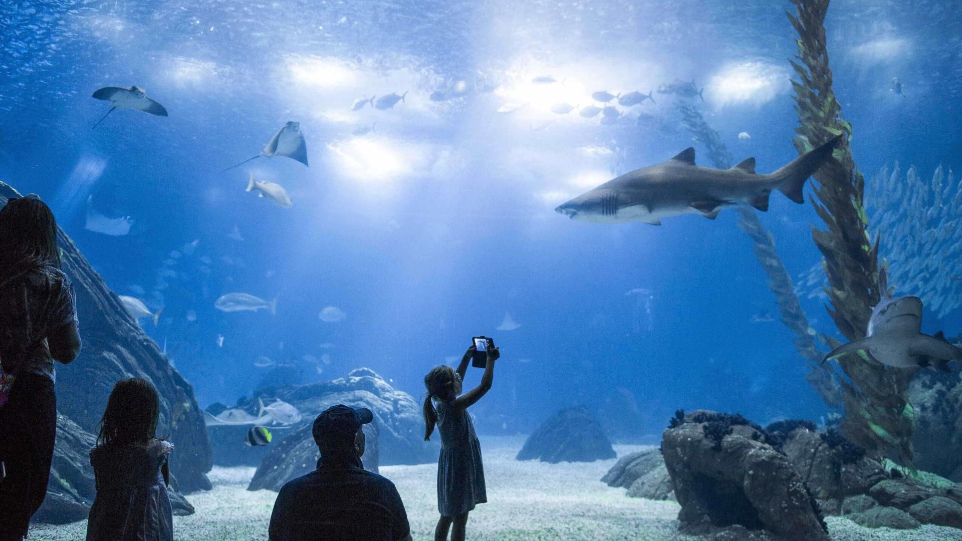 Oceanário apoia projetos de conservação de tubarões e raias