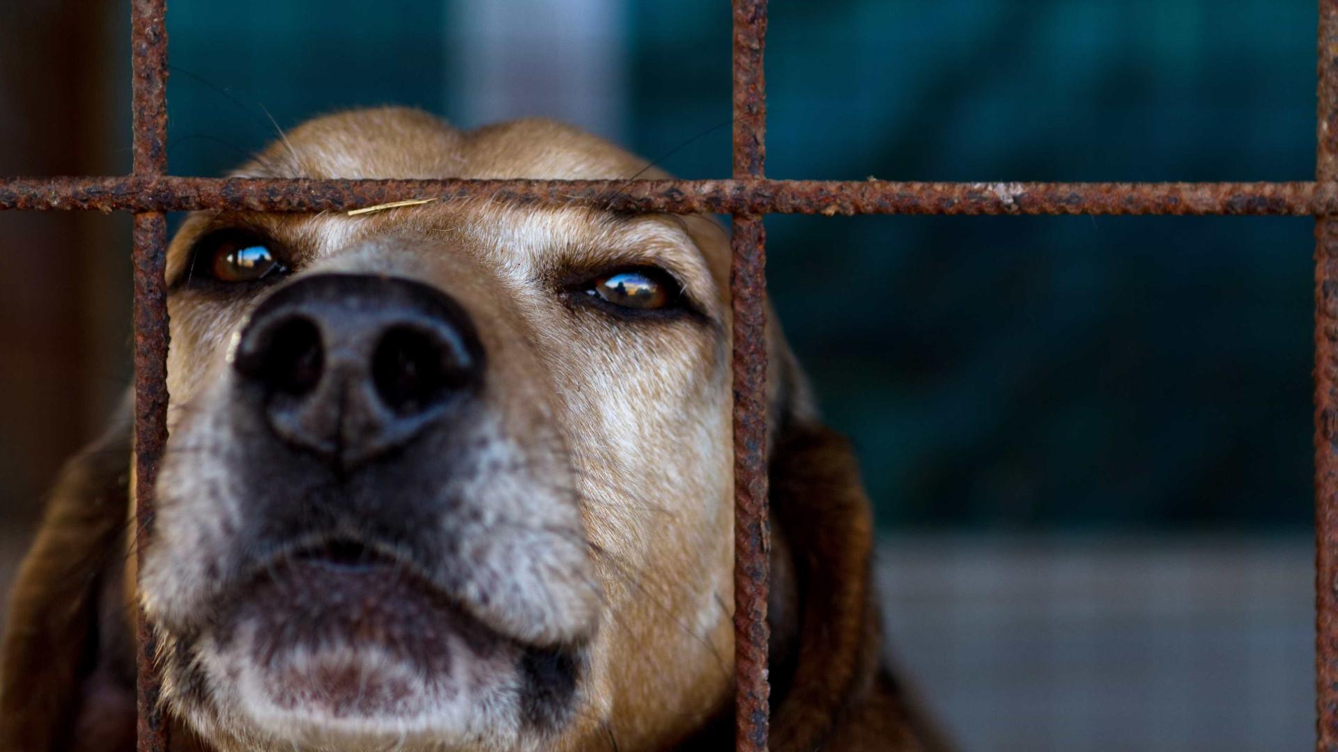 Número de animais abandonados está a aumentar em Portugal