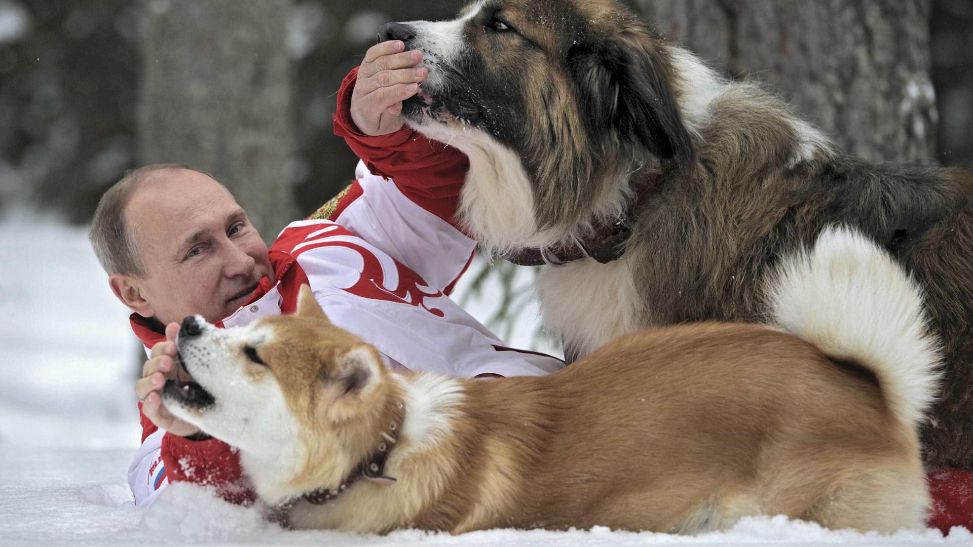 Putin, o homem que até intimida ursos
