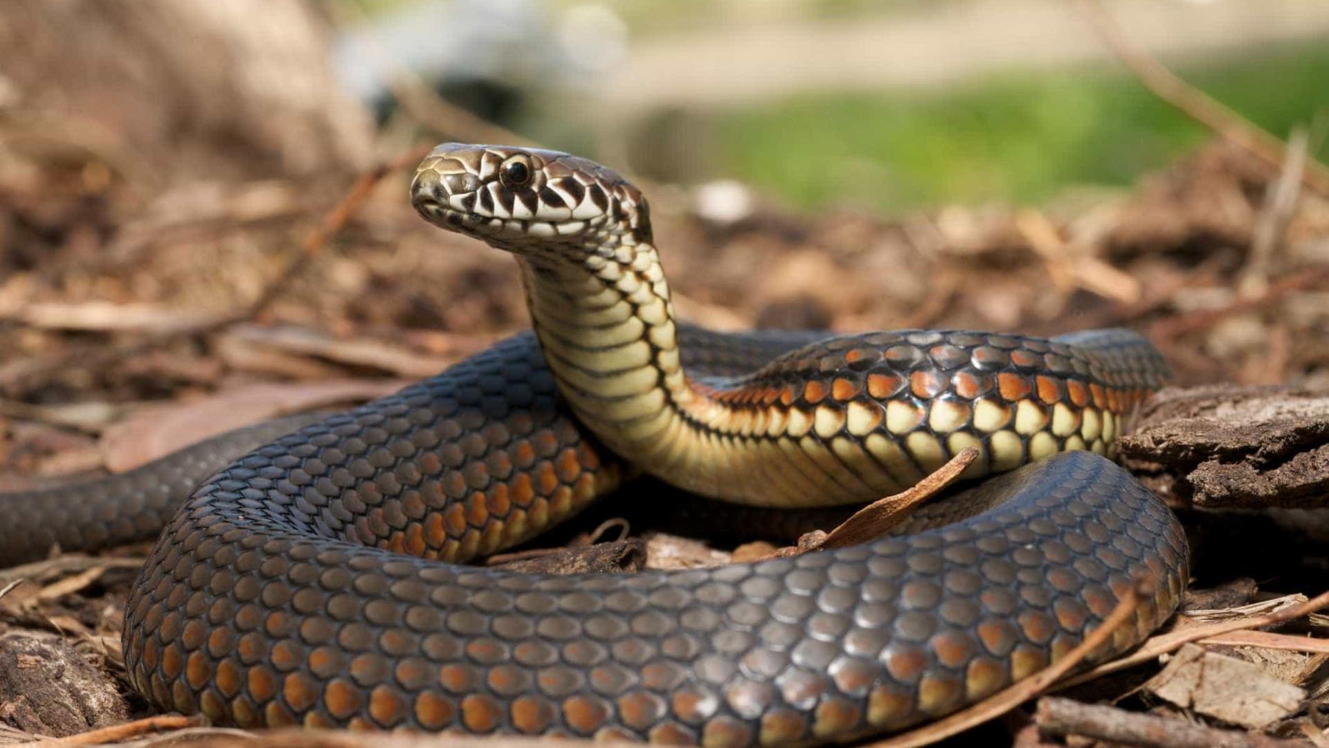 Resultado de imagem para serpentes