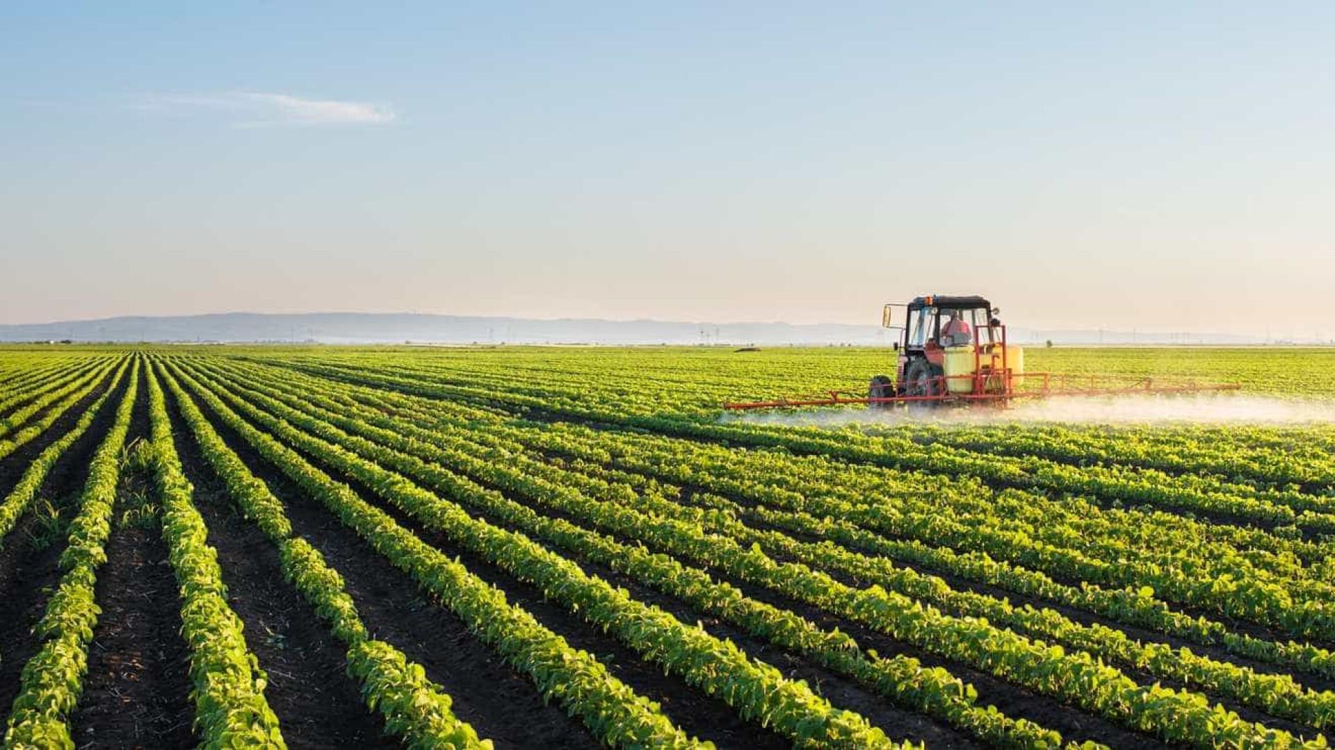 18 estrangeiros ilegais em exploração agrícola em Mira