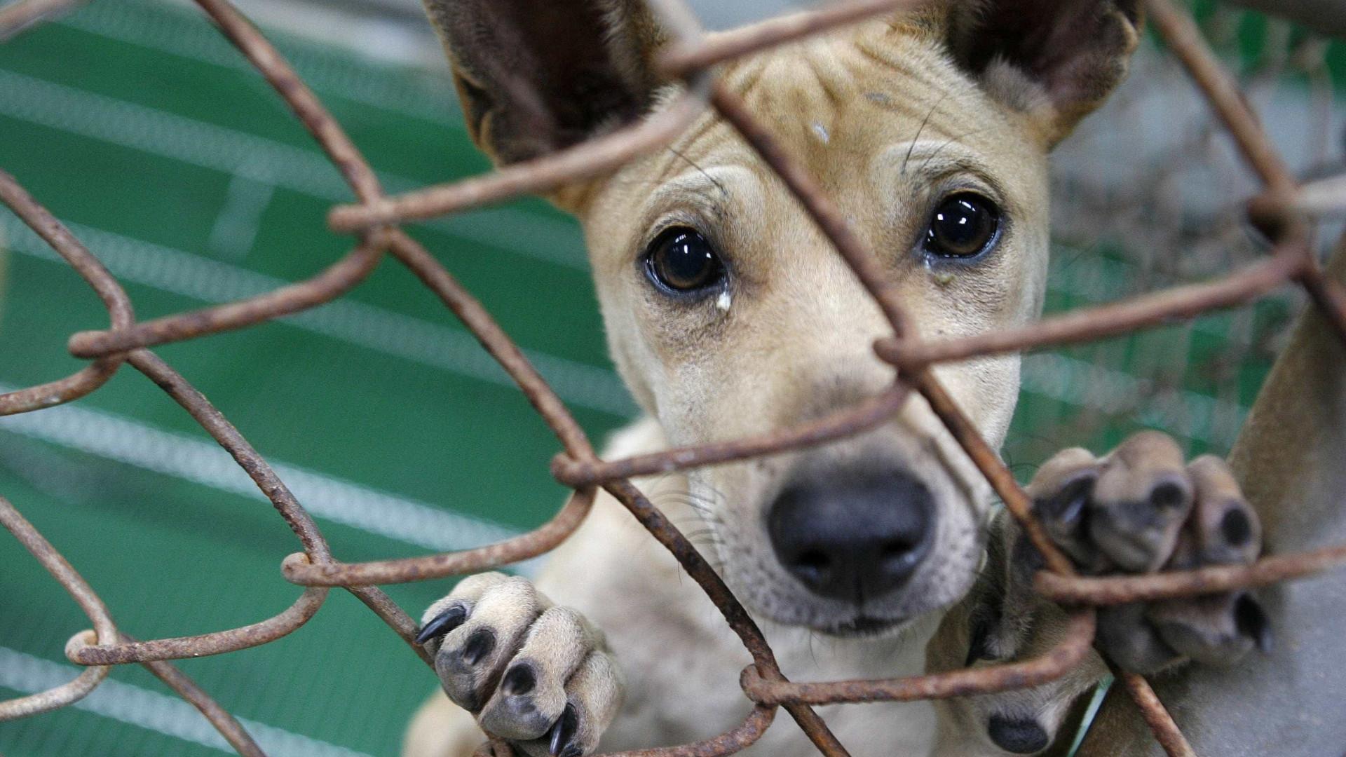 Resolver problema de animais abandonados no Funchal vai levar 10 anos