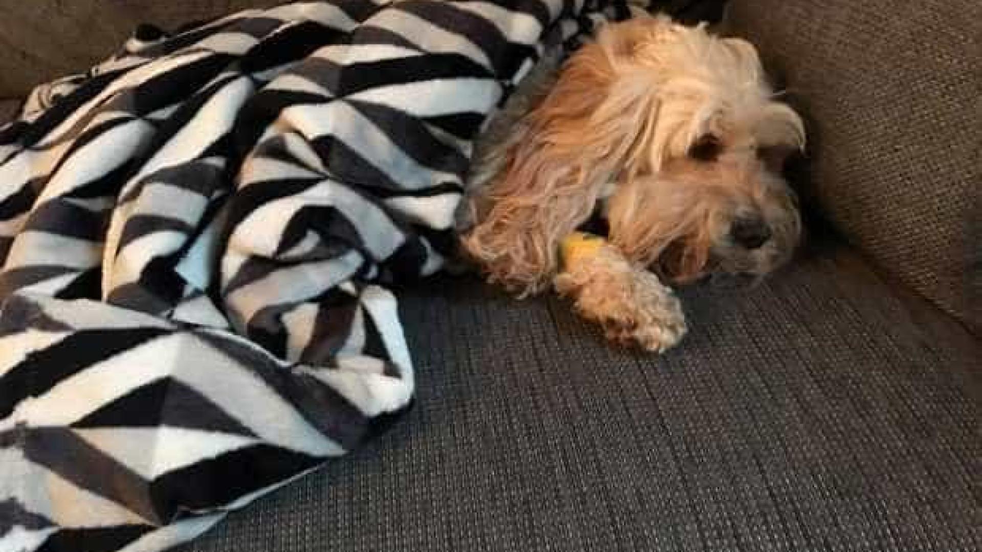 Cão morre depois de ter lambido pão de caixote do lixo