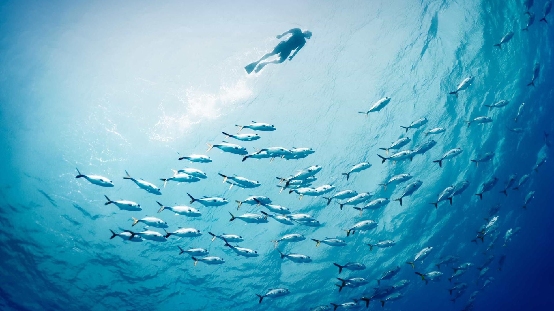 Oceanos dão mote para festival de cinema a partir de quinta-feira em Faro