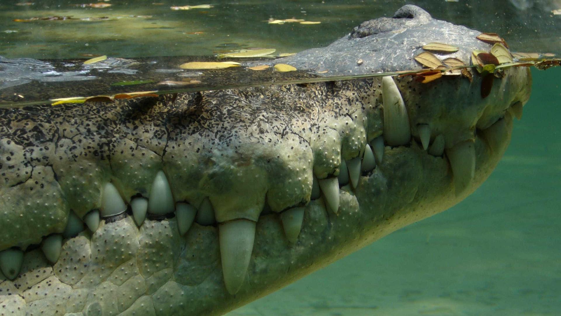 Foi desafiado a atravessar rio de crocodilos. Sobreviveu por pouco