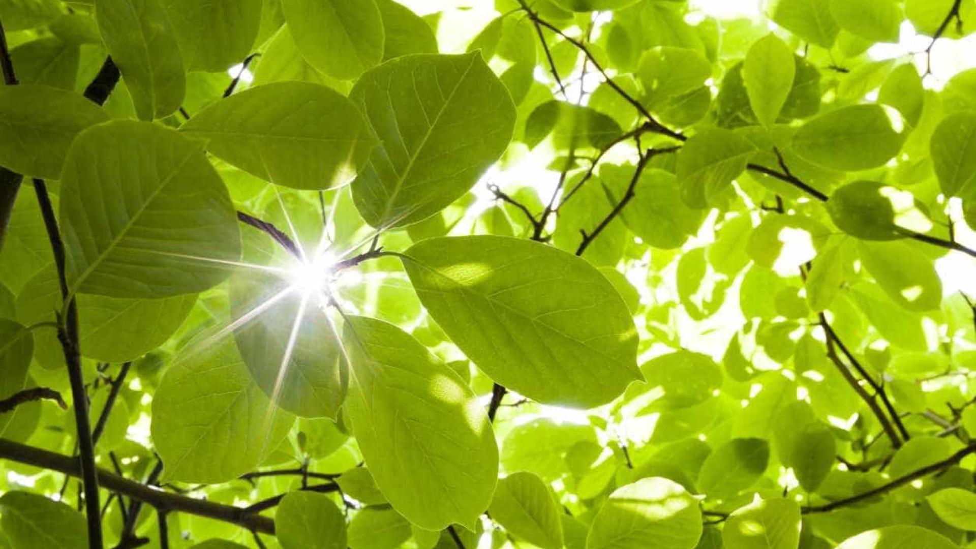 Associação alerta para riscos do uso generalizado da biomassa florestal