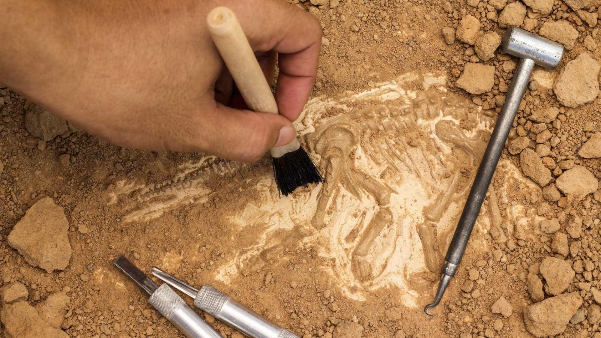 Península Ibérica teria maior diversidade de dinossauros saurópodes