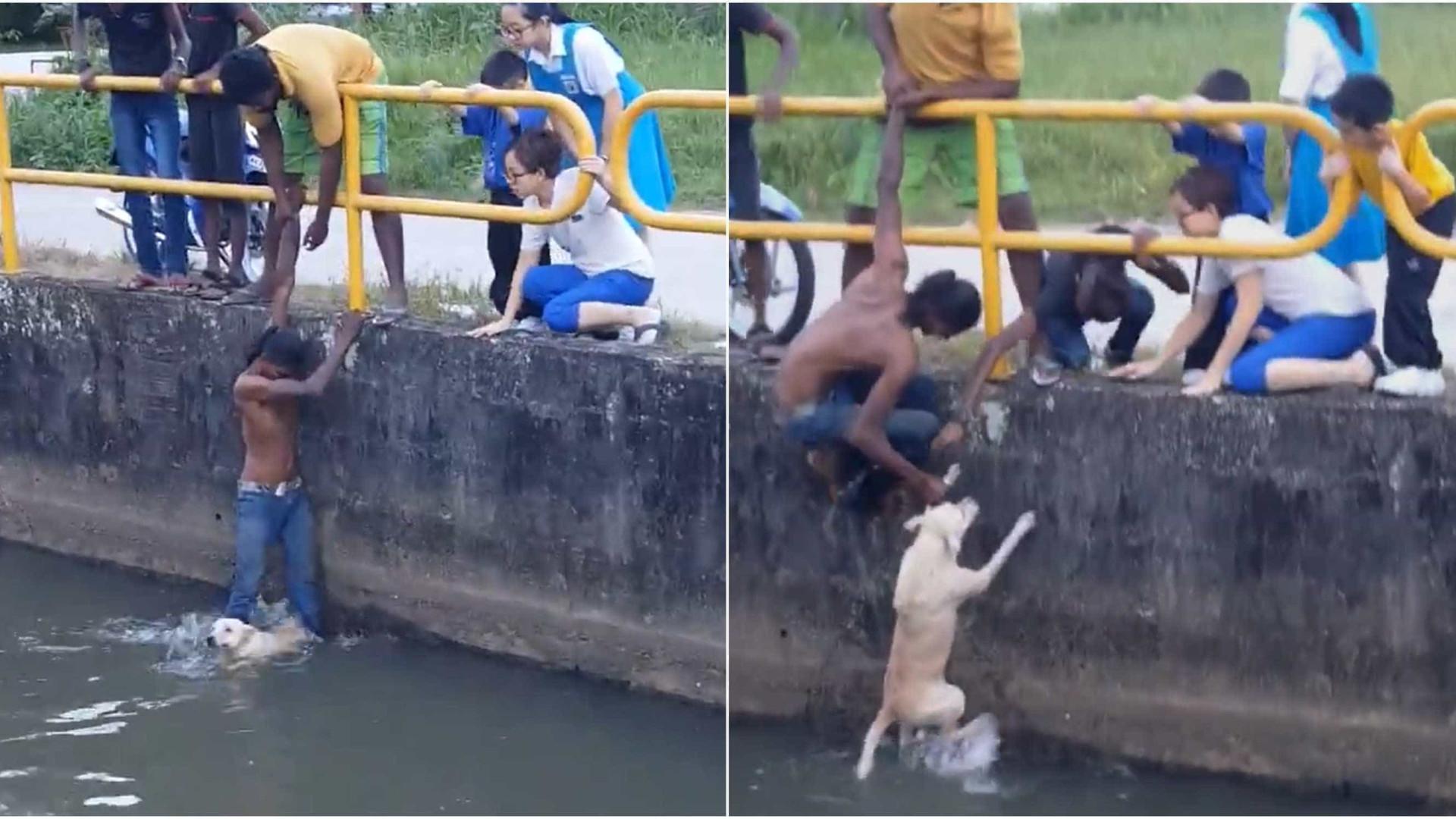 Jovens salvam cão de afogamento