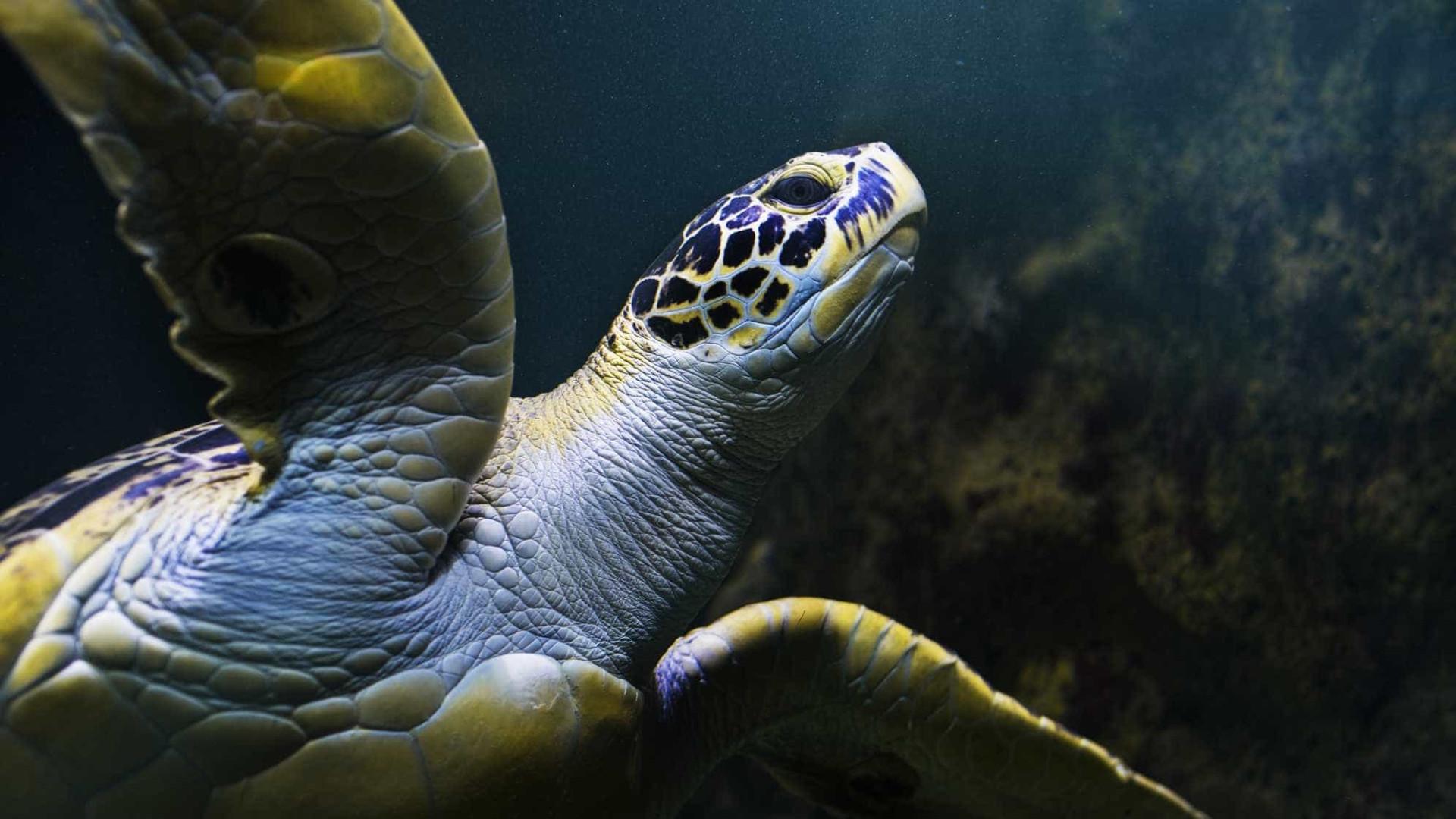 As tartarugas são quase todas fêmeas e a culpa é do aquecimento global