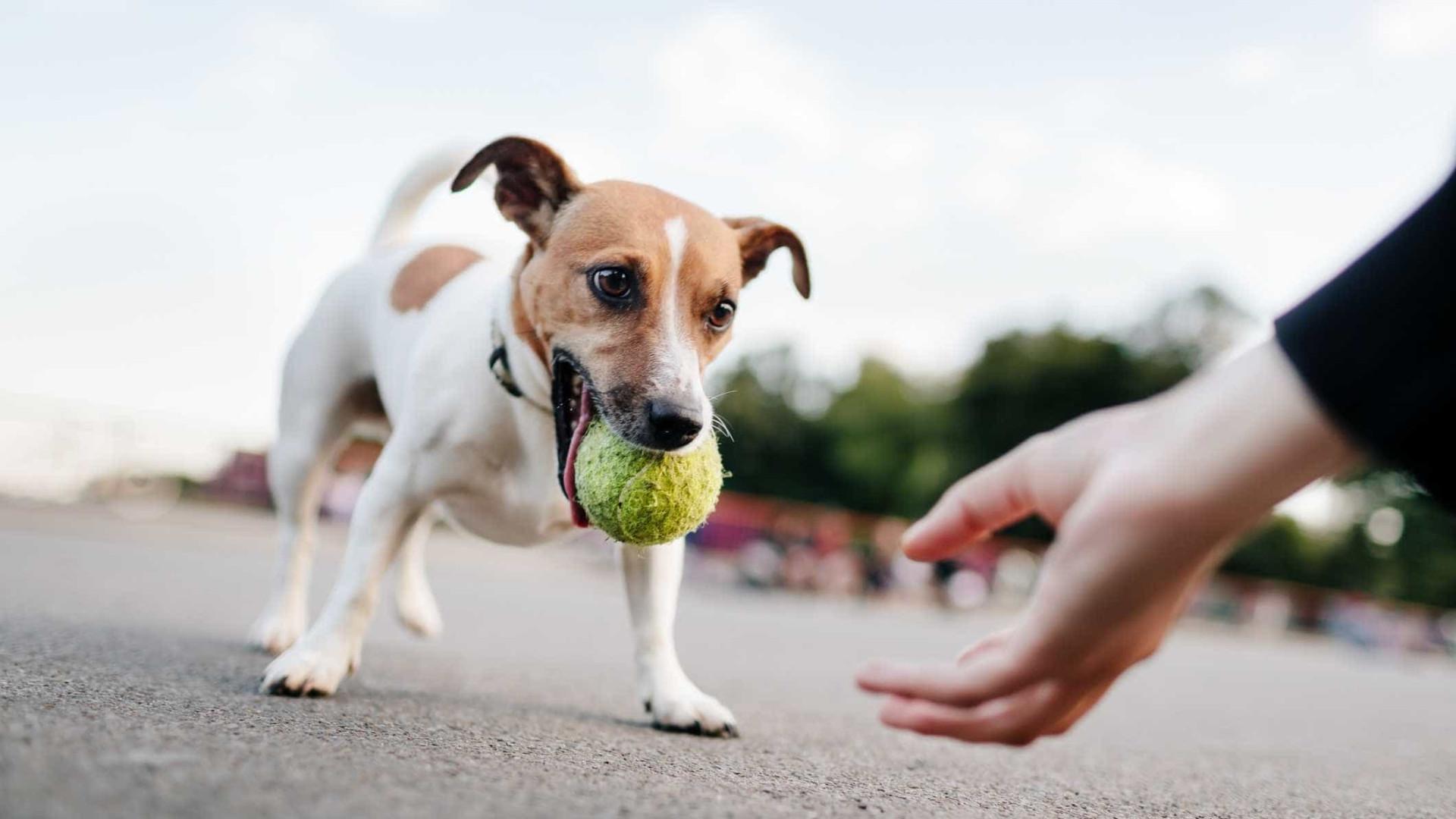 A ciência já não tem dúvidas: Donos de cães vivem mais anos