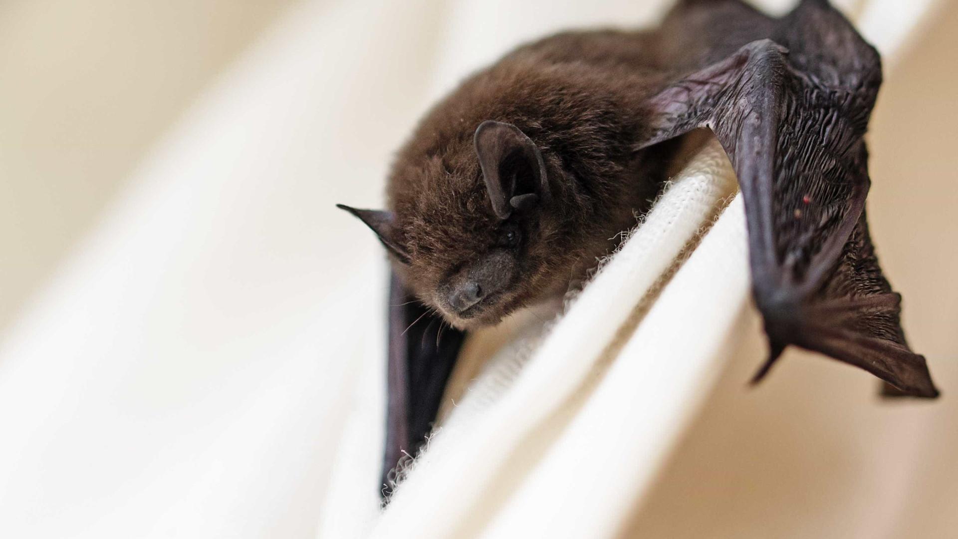 Criança de seis anos morre depois de tocar em morcego infetado