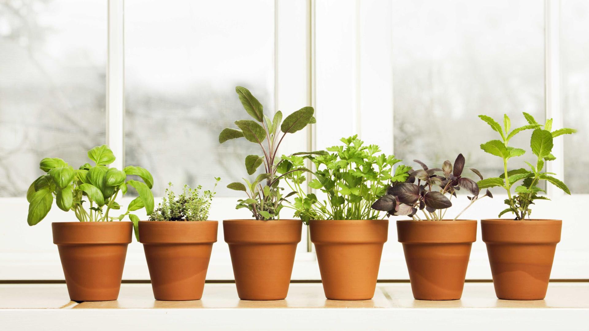 Eis como ter plantas, flores e temperos em qualquer lugar da casa