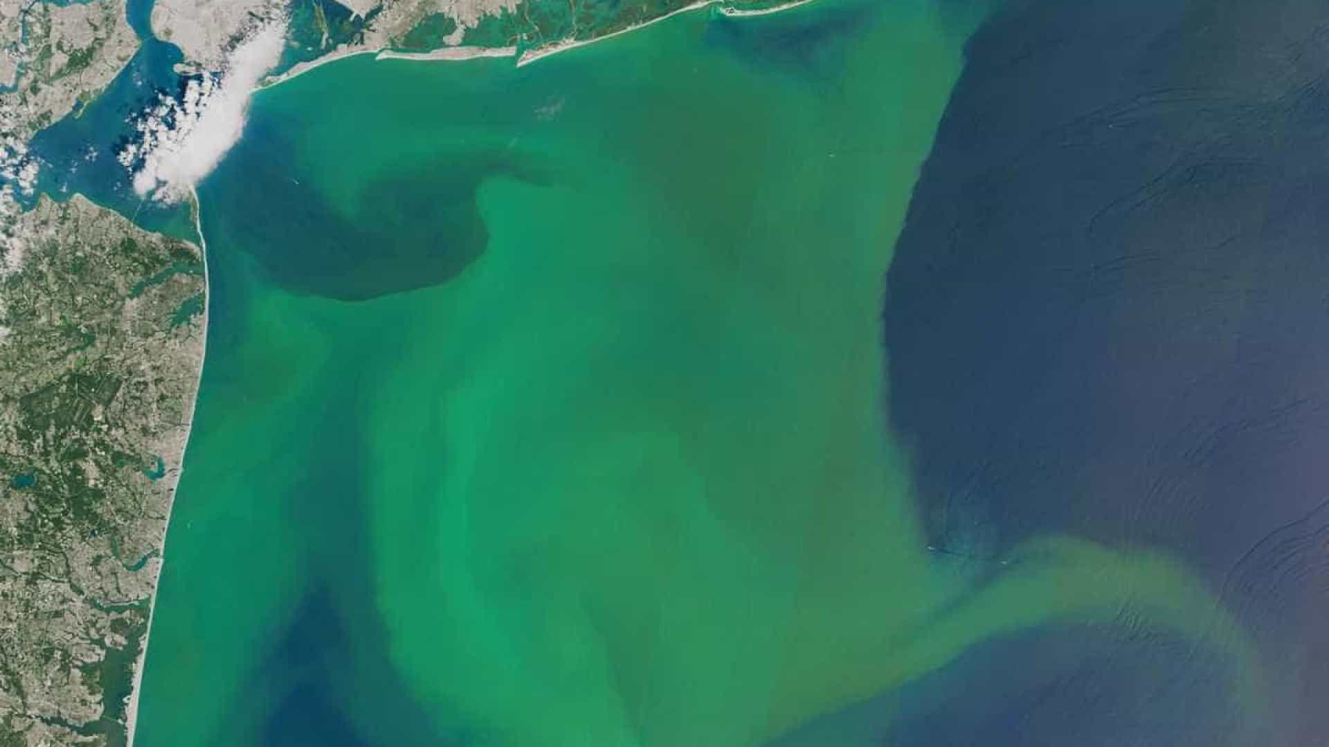 Visto do espaço, é tudo lindo. Até estas algas (às vezes) perigosas