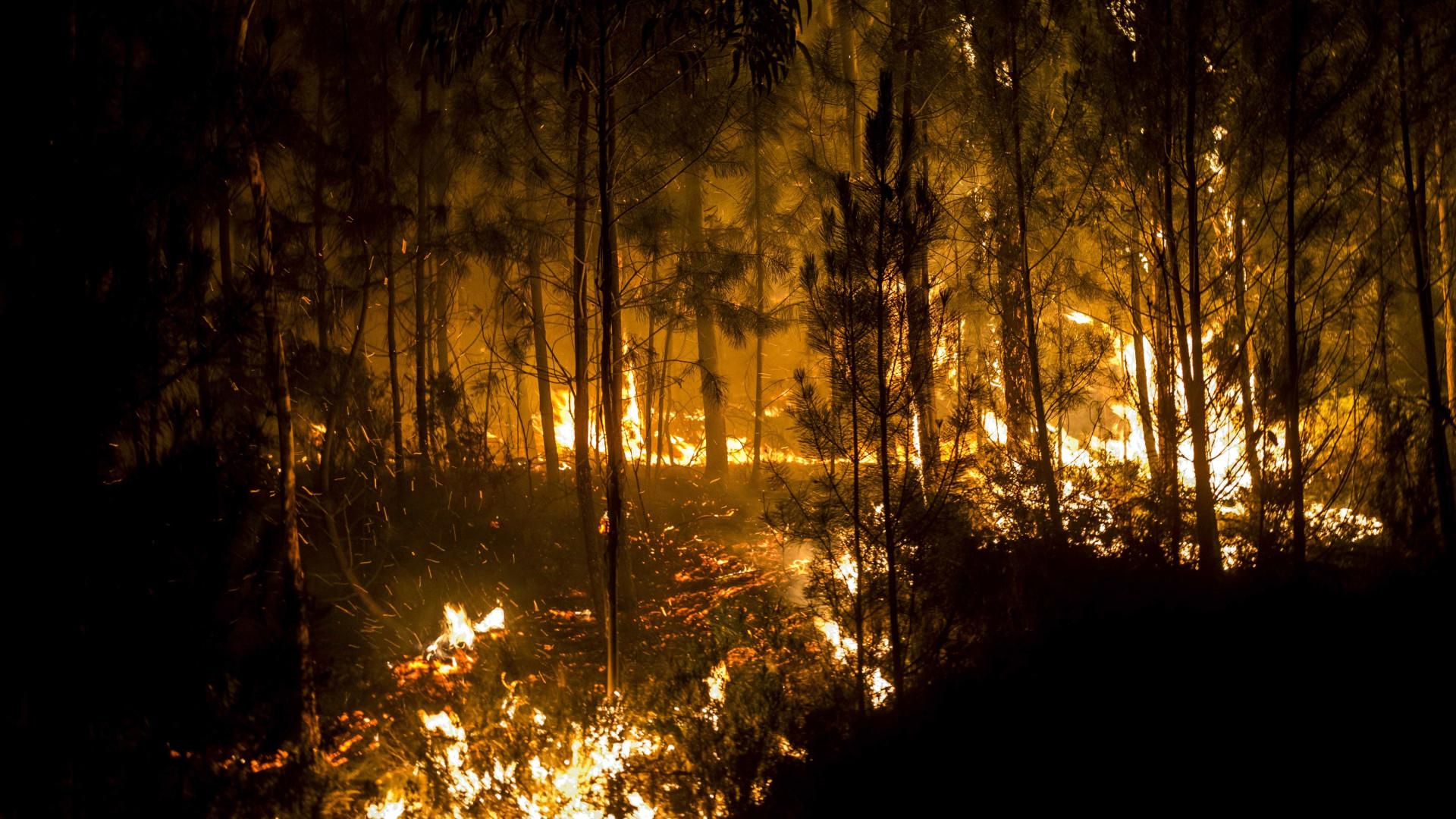 """""""A prevenção é a palavra-chave quando falamos de floresta"""""""