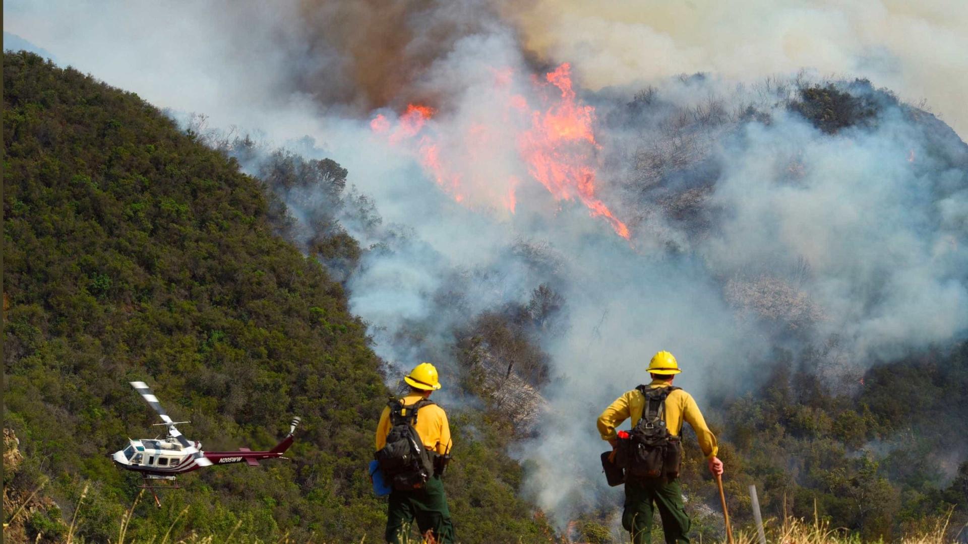 Um homem detido em Viseu por suspeita de incêndio florestal