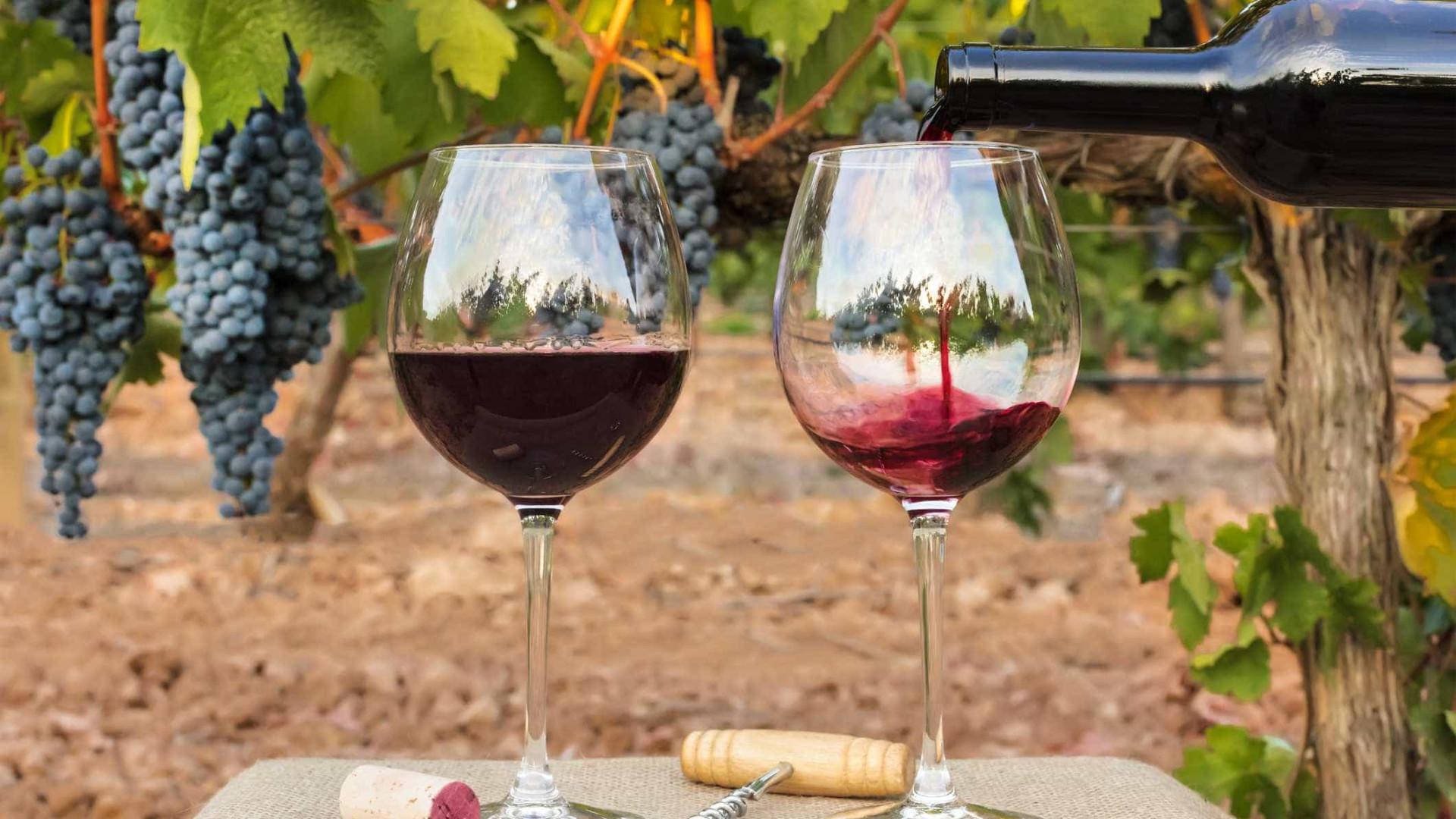 'Escaldão' causa perdas na produção de vinho no Alentejo