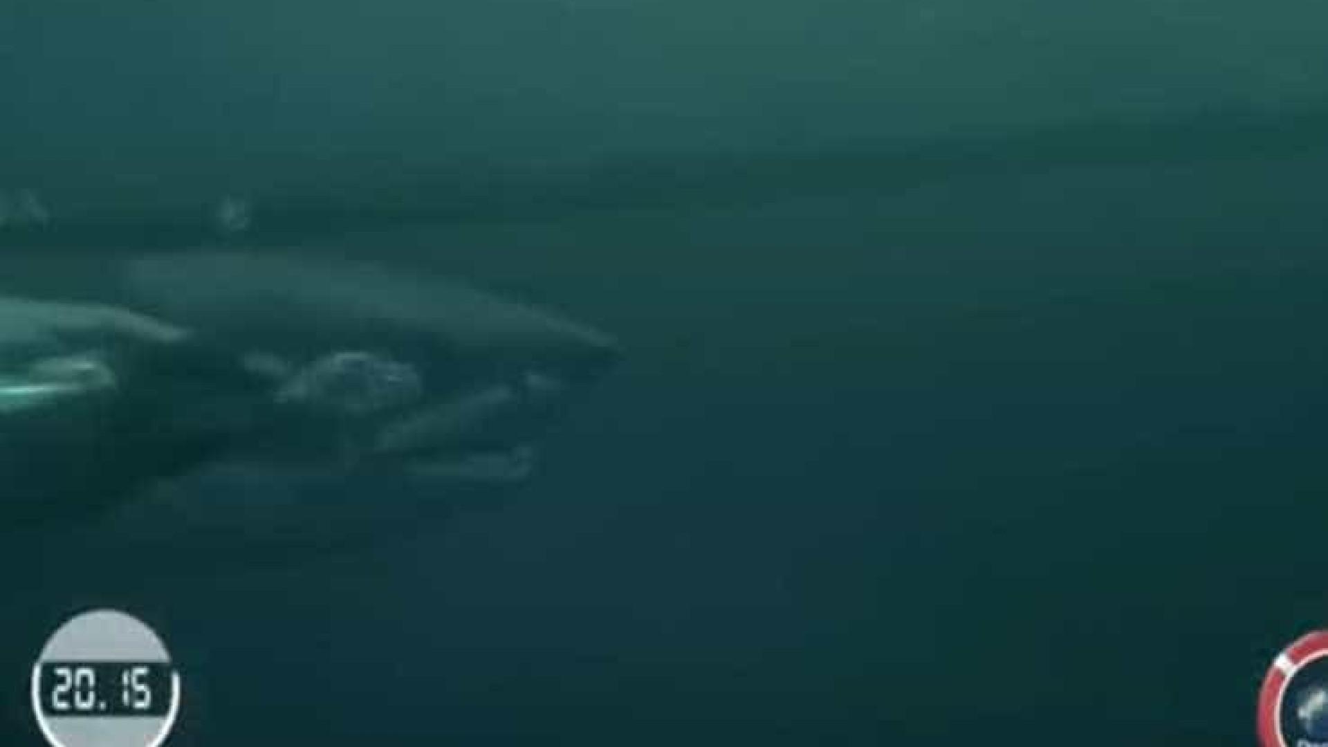 Nadador Michael Phelps aposta corrida com tubarão no mar